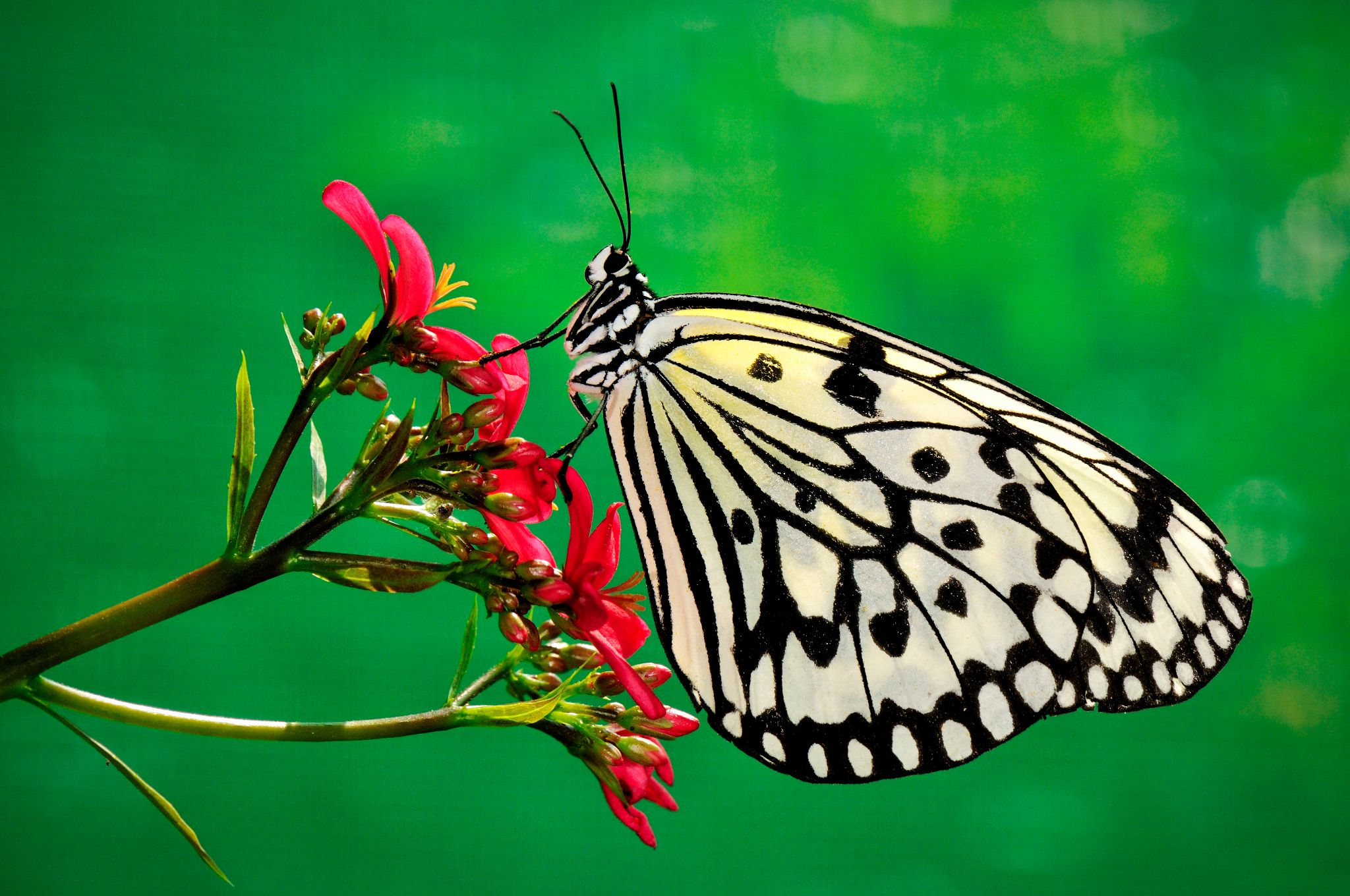 Butterfly by pslee