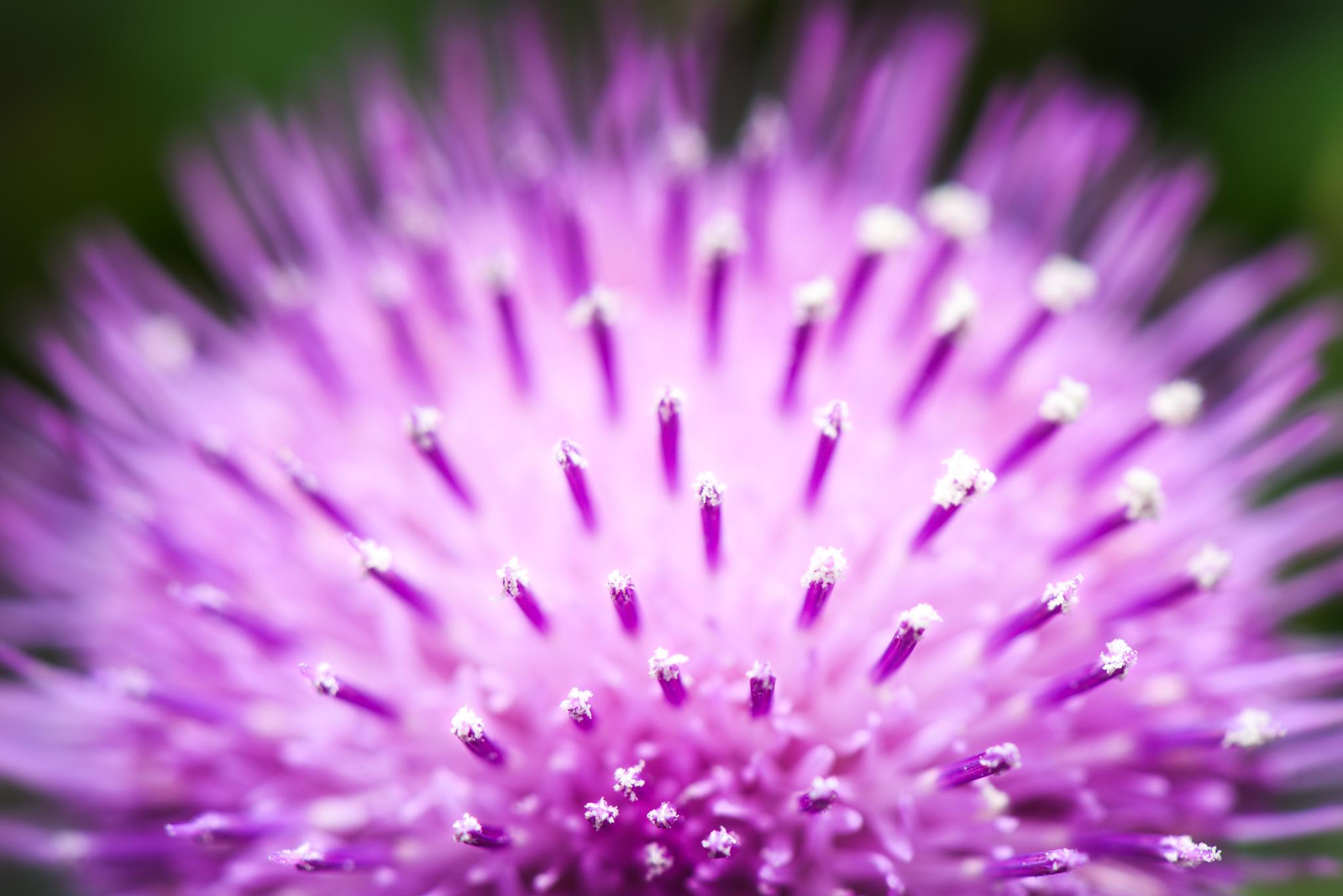 Flowers macro by pslee