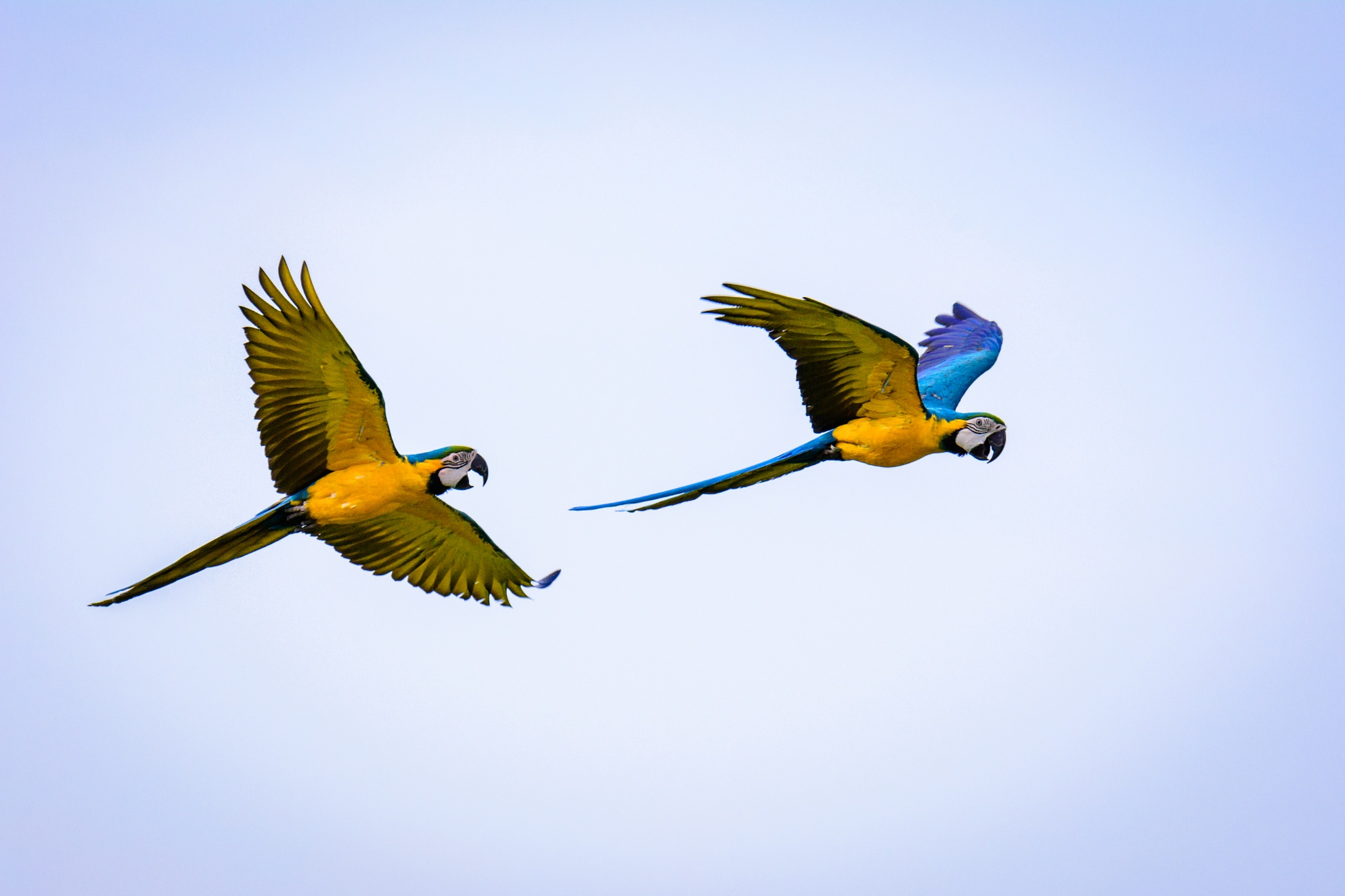 Parrots by pslee