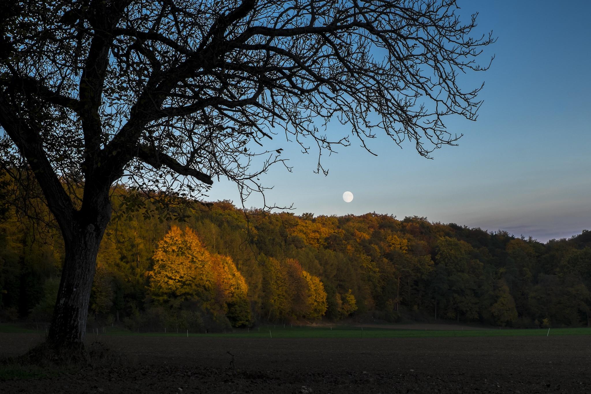 autumn eve by Matthias Gaberthüel