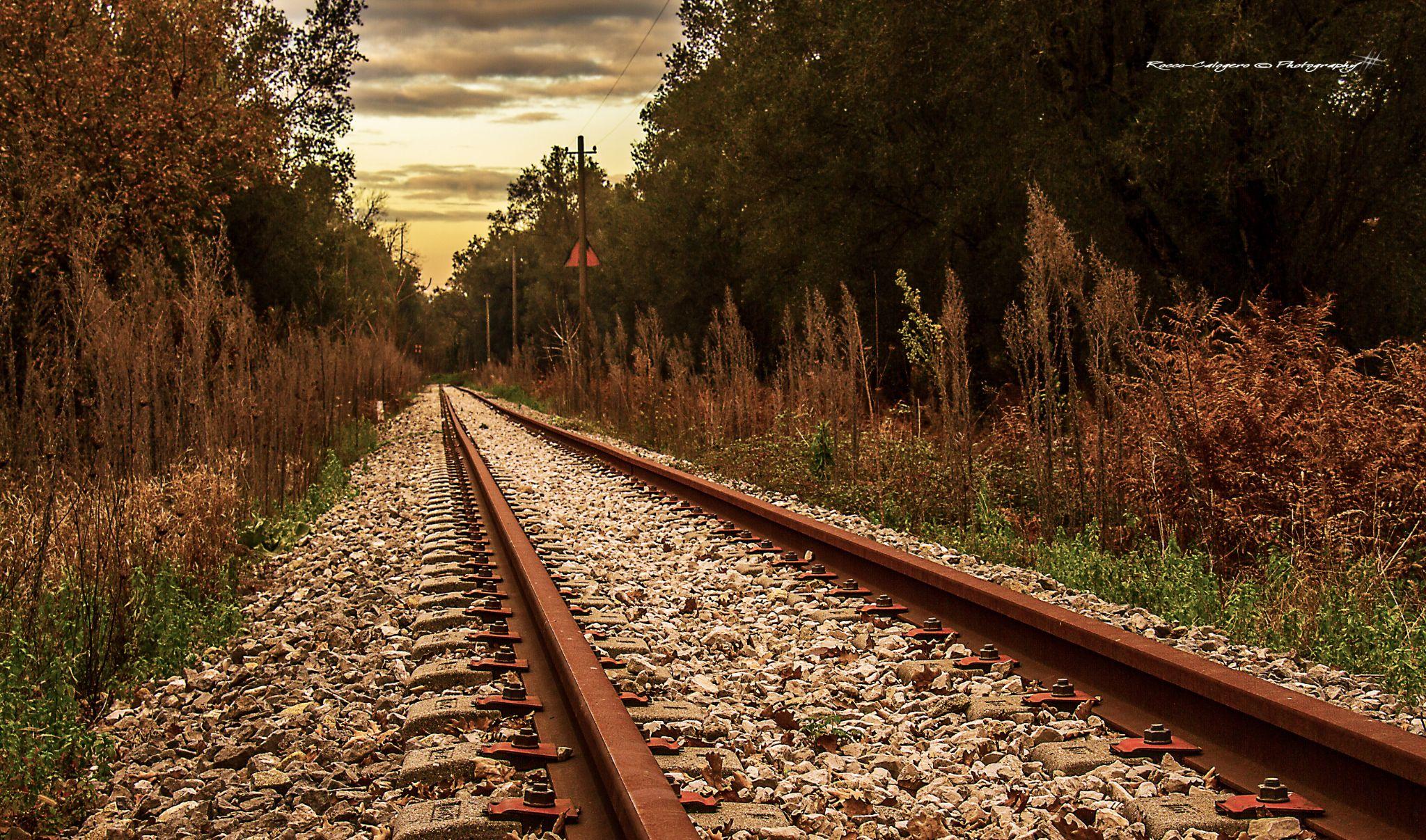 rail tracks by Rocco Calogero
