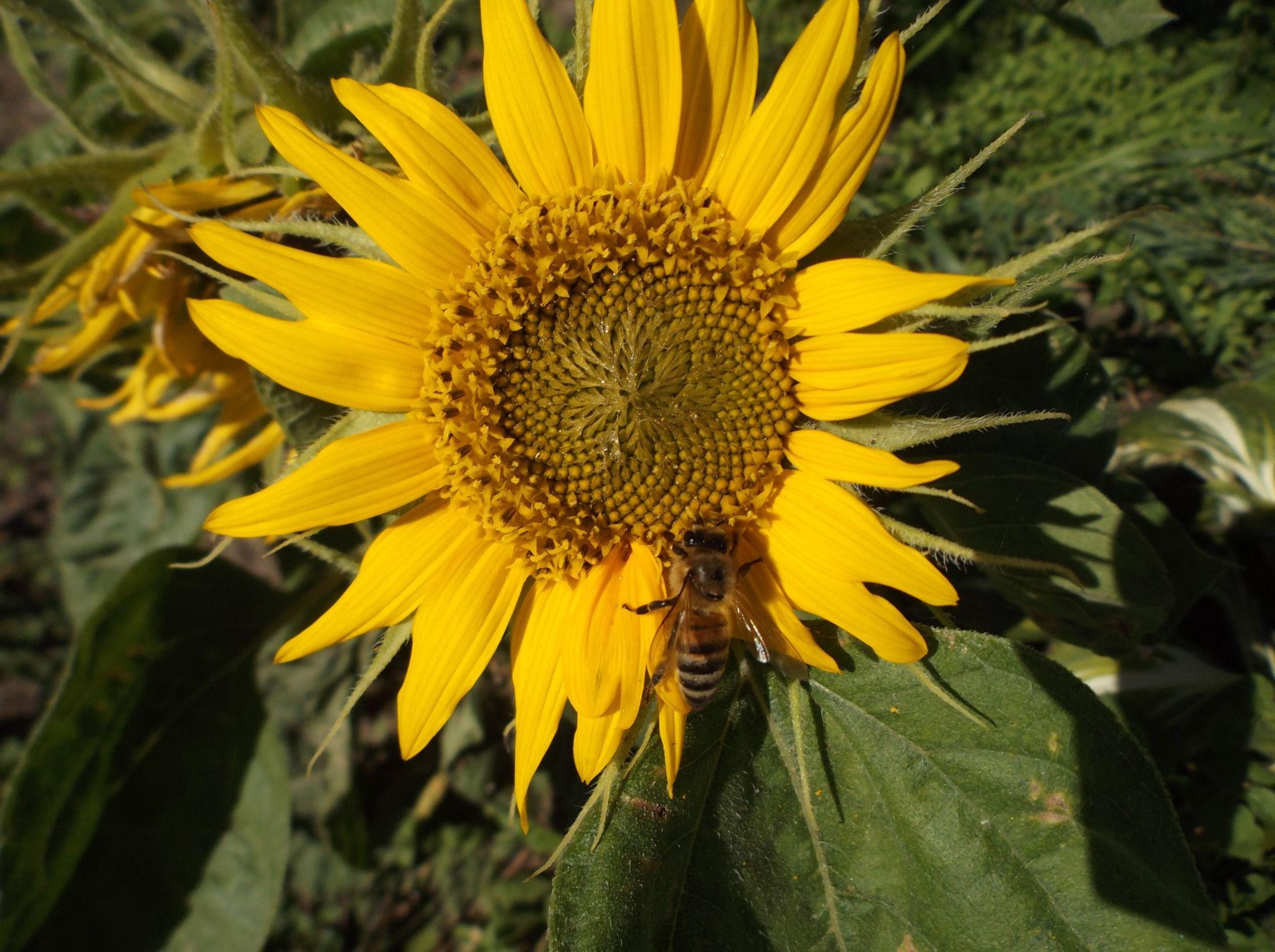 Bee  on a flower by Zita Užkuraitienė