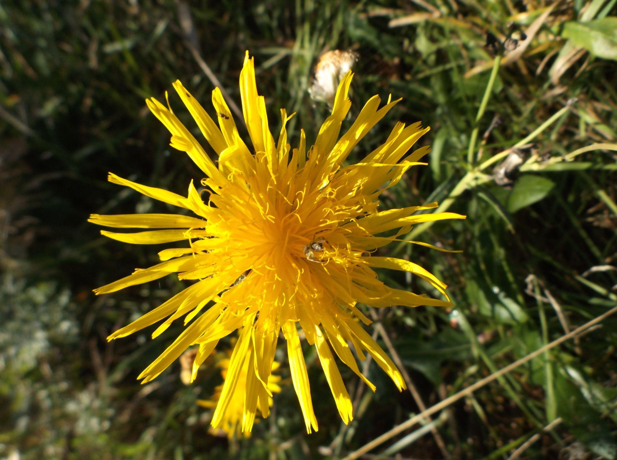 ,,Daisy meadow'' by Zita Užkuraitienė