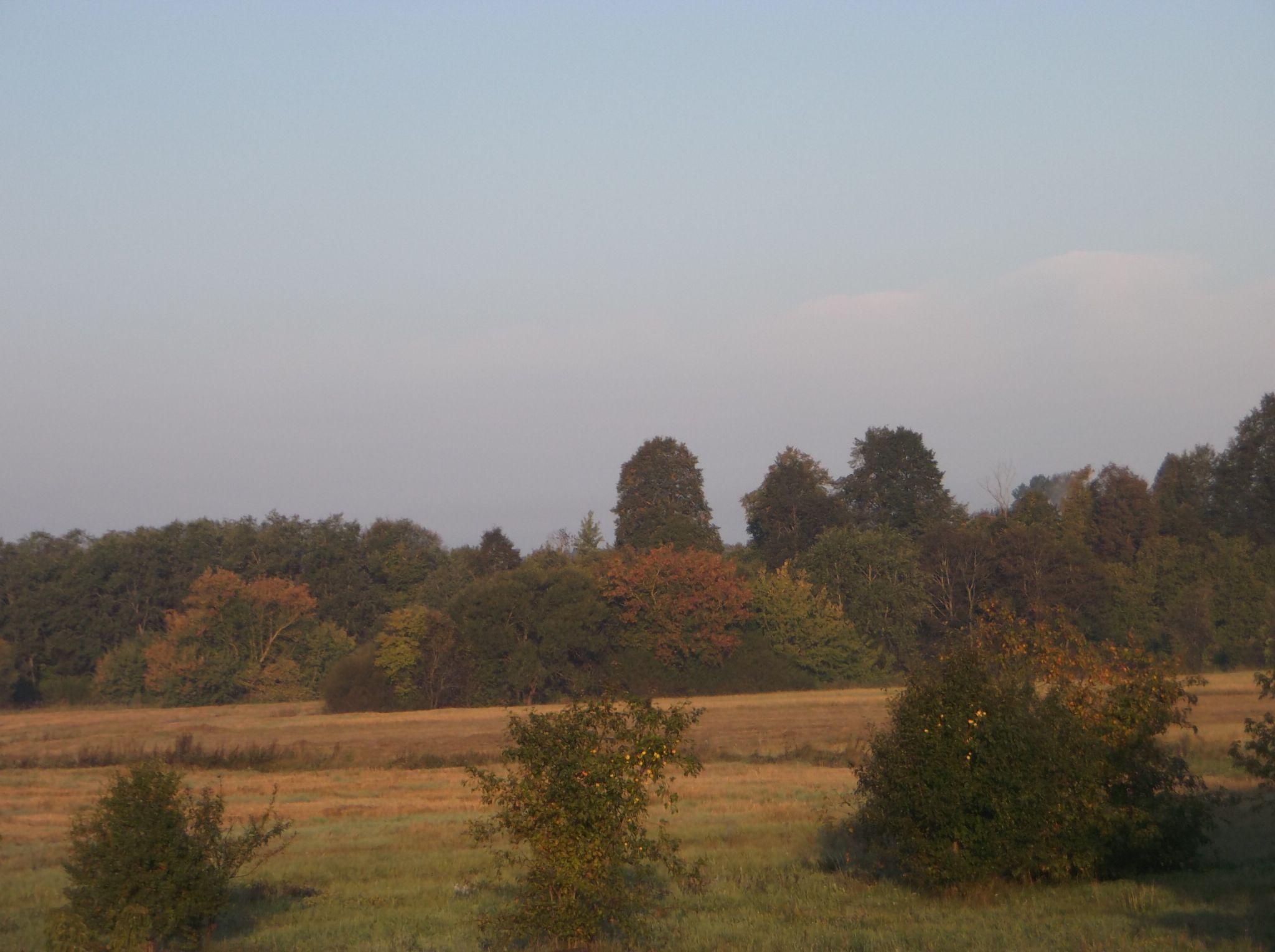 Autumn -3 by Zita Užkuraitienė