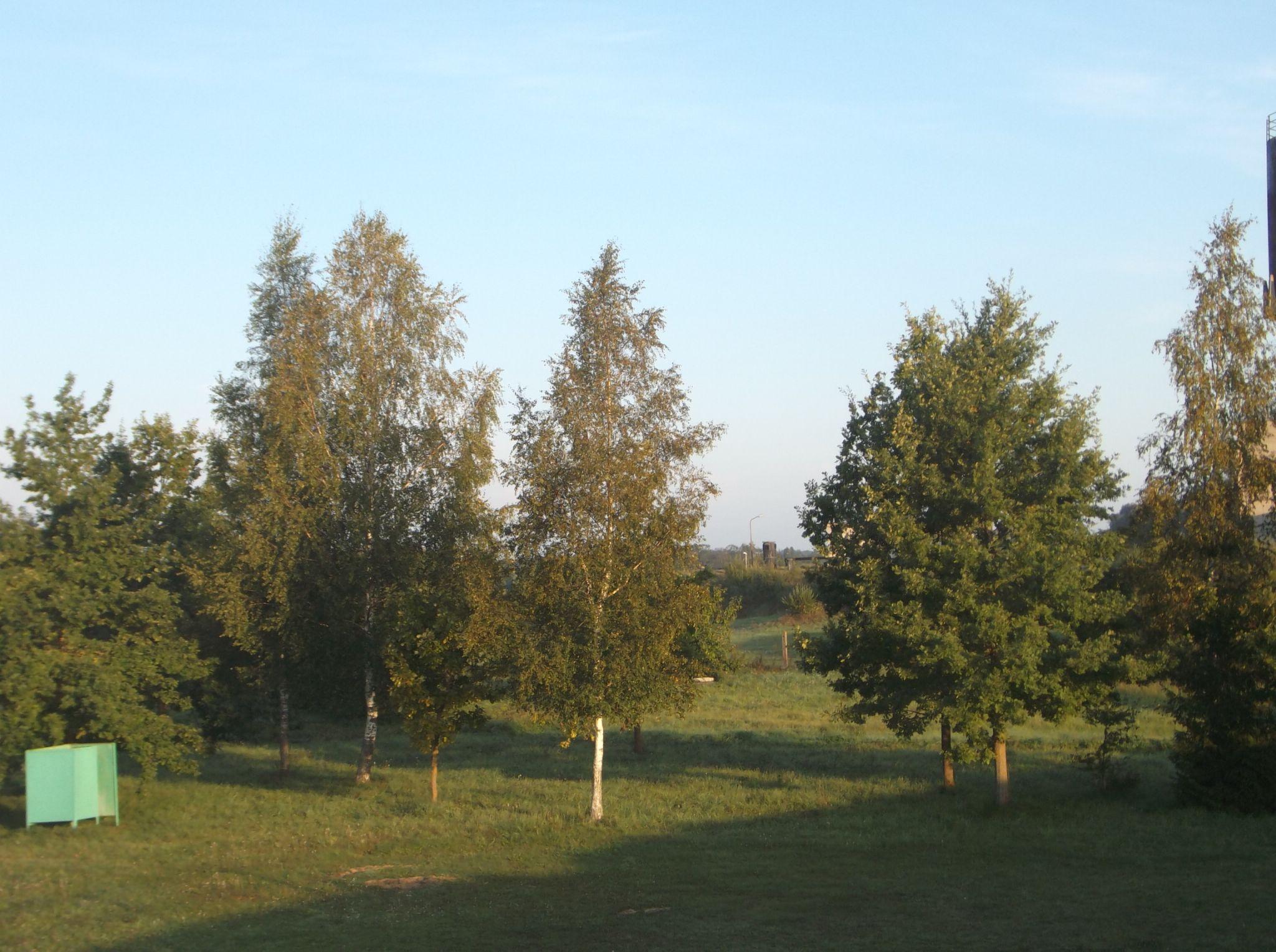 The trees in the morning. by Zita Užkuraitienė