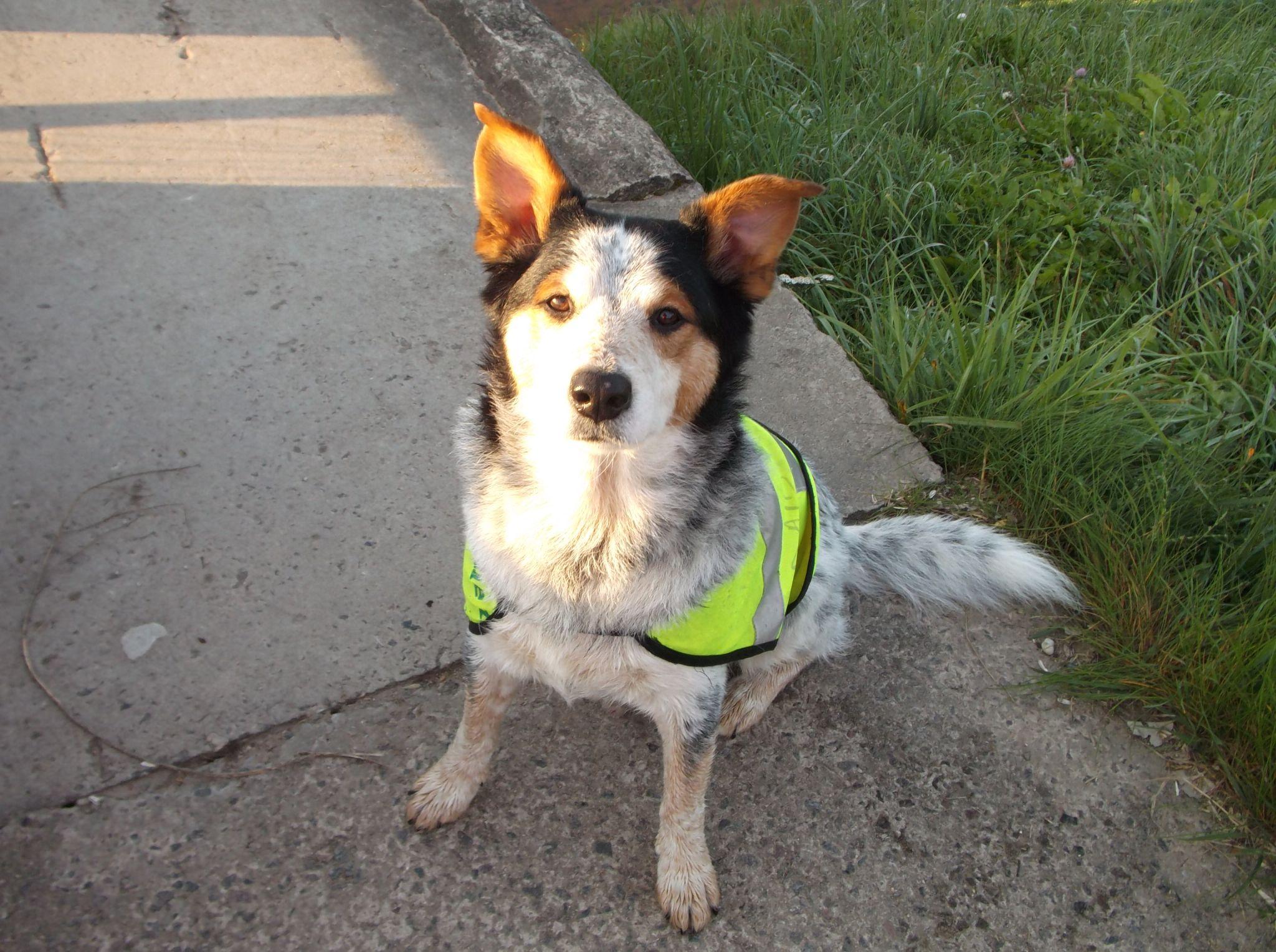 Max my dog. by Zita Užkuraitienė