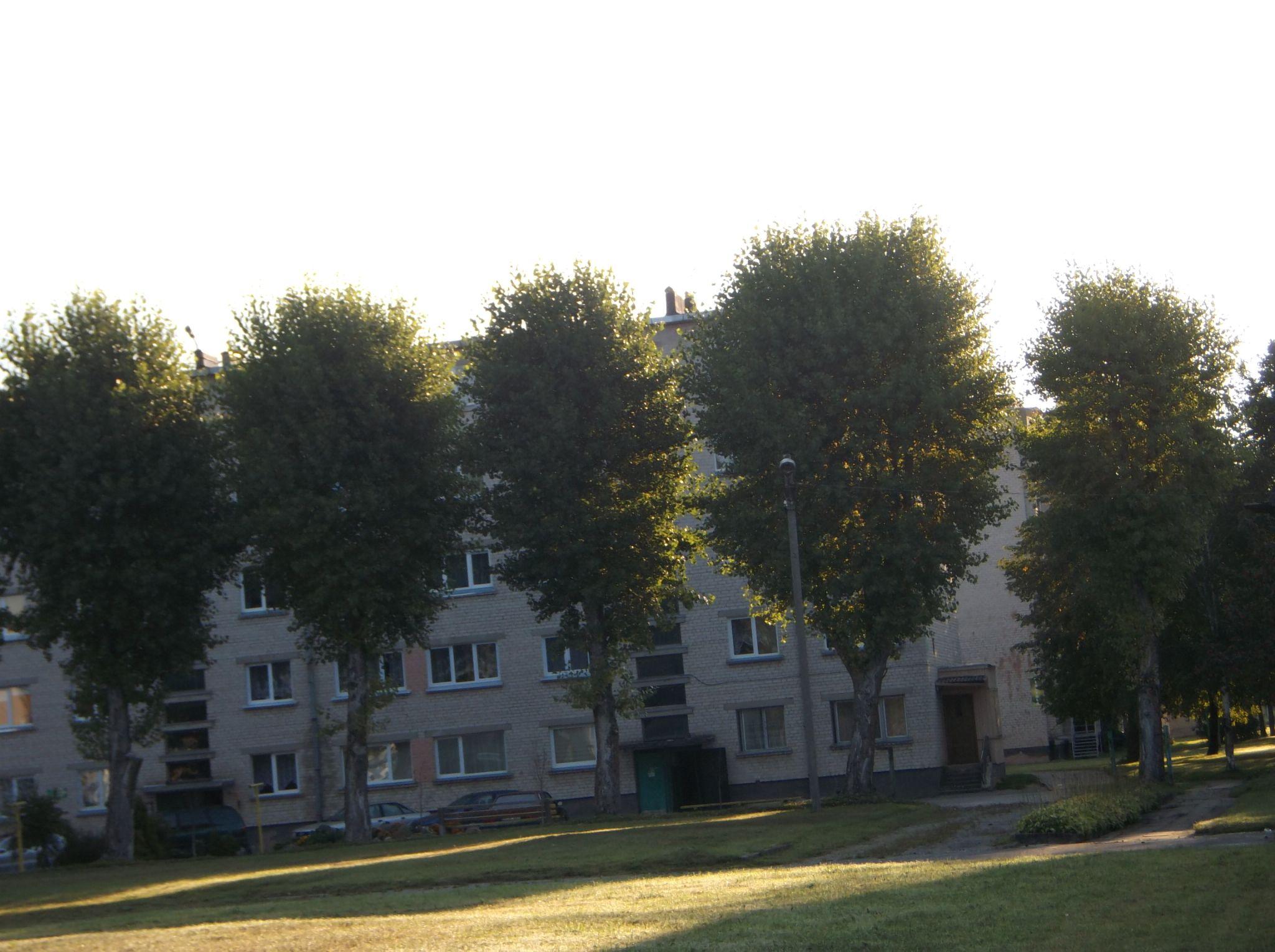 Trees to house. by Zita Užkuraitienė