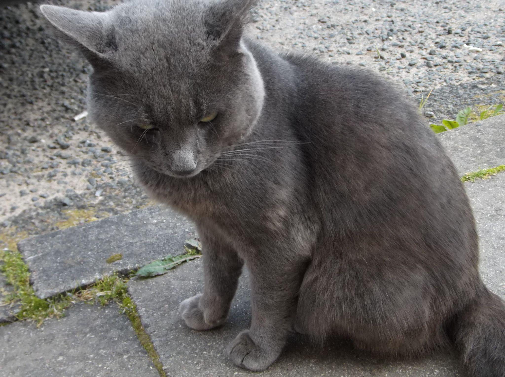 Yard Cat-3 by Zita Užkuraitienė
