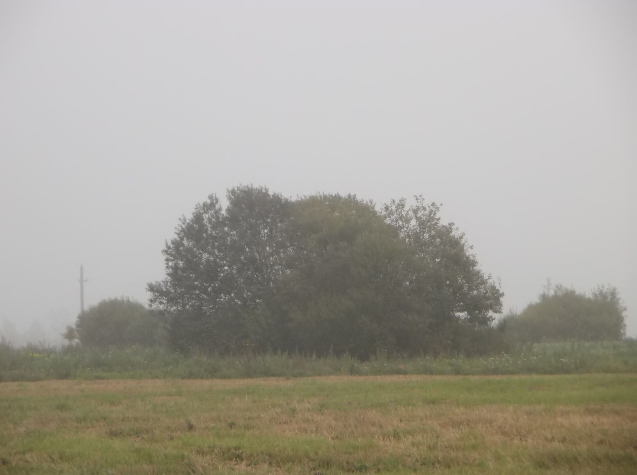 In the fog. by Zita Užkuraitienė