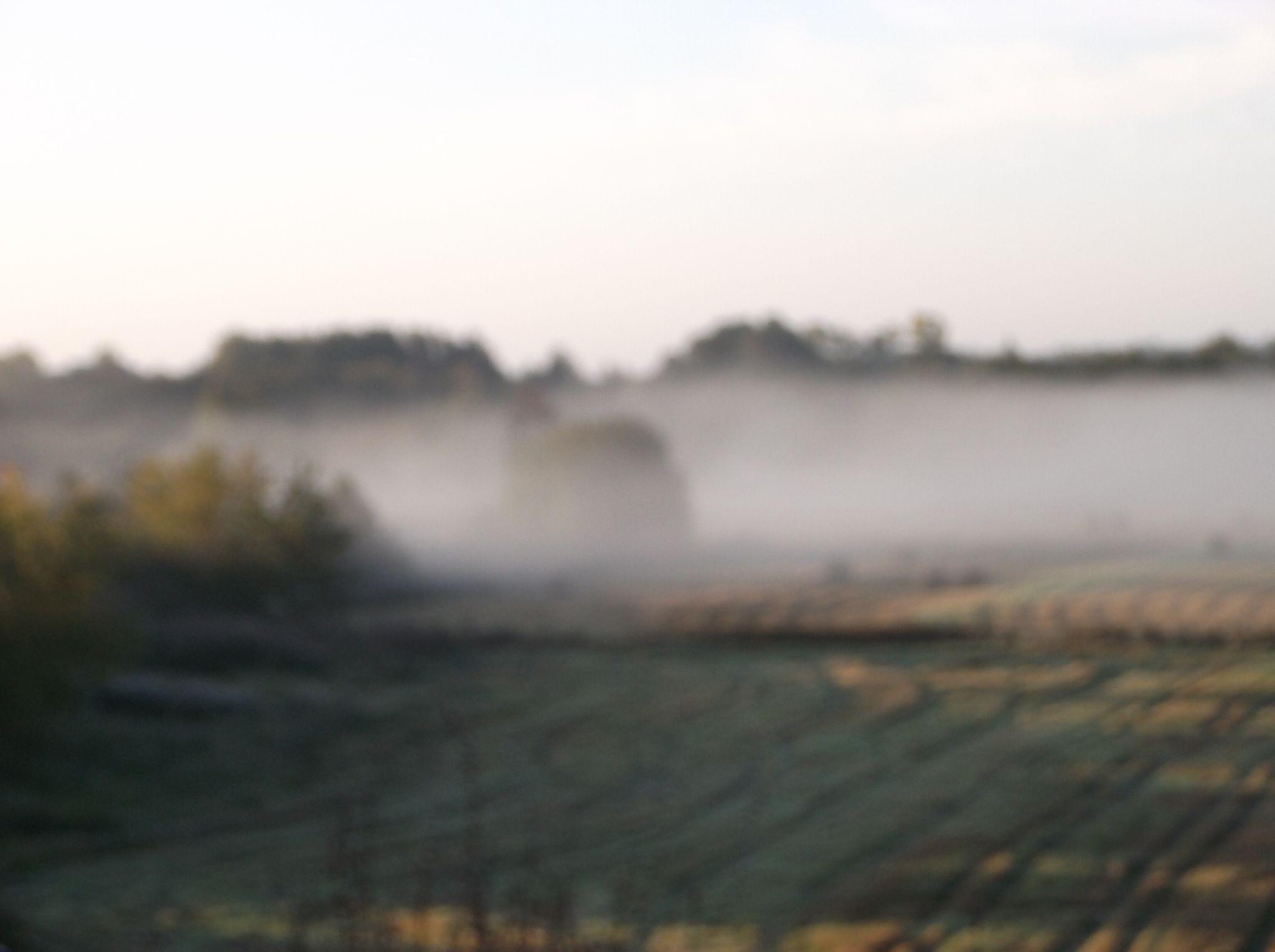 Drowned in the fog. by Zita Užkuraitienė