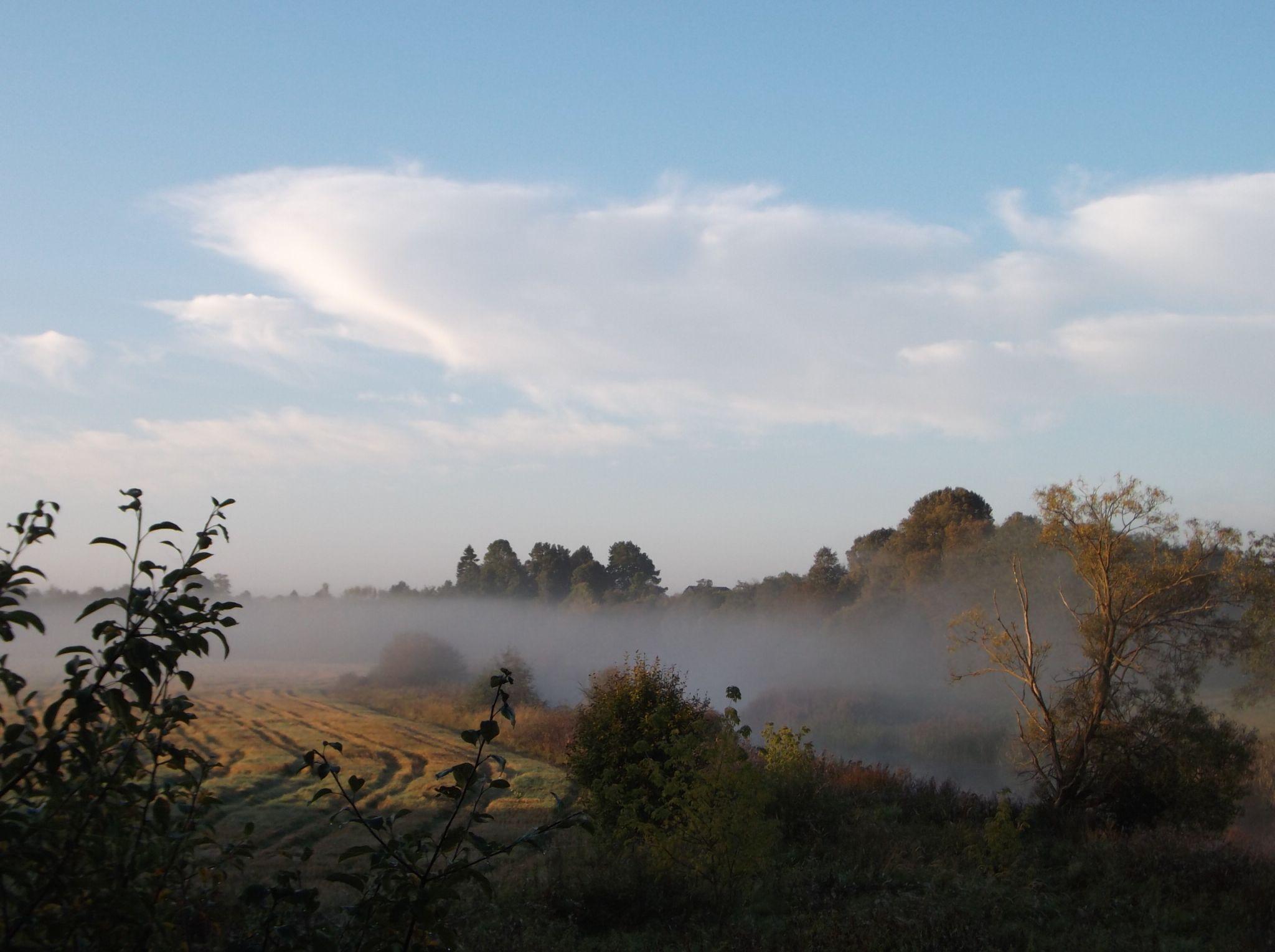 Morning on the river. by Zita Užkuraitienė