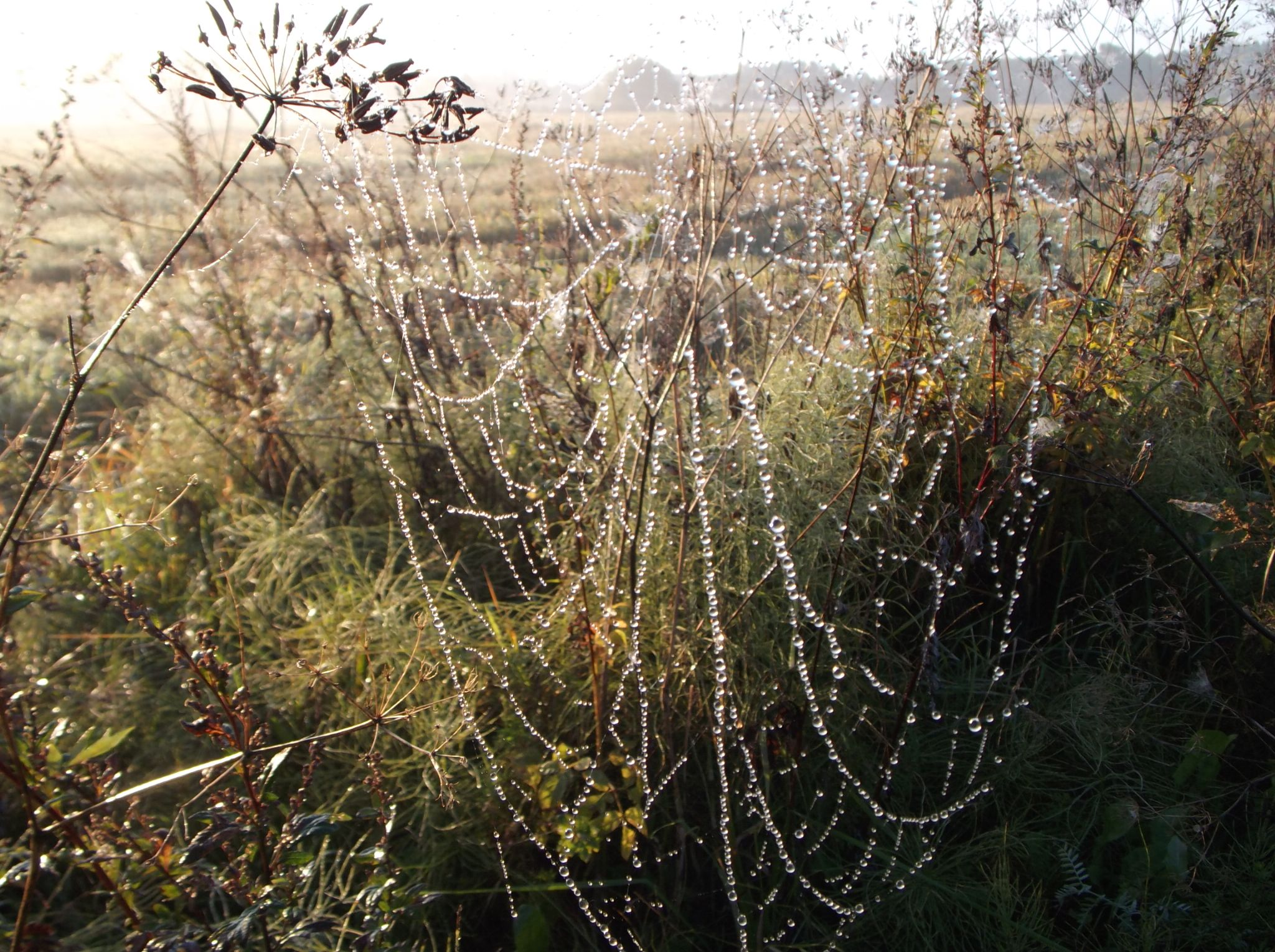 Spider ,,necklace'' by Zita Užkuraitienė