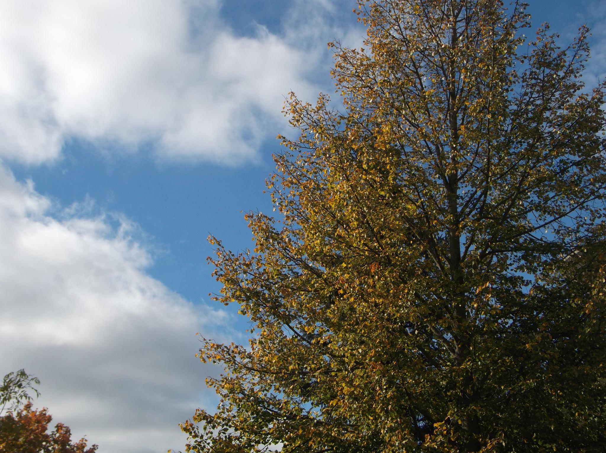 Autumn sky. by Zita Užkuraitienė