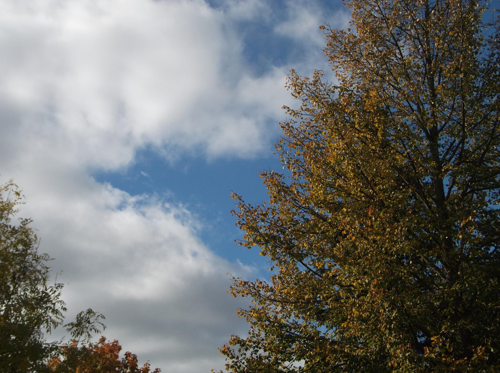 Sky and tree. by Zita Užkuraitienė