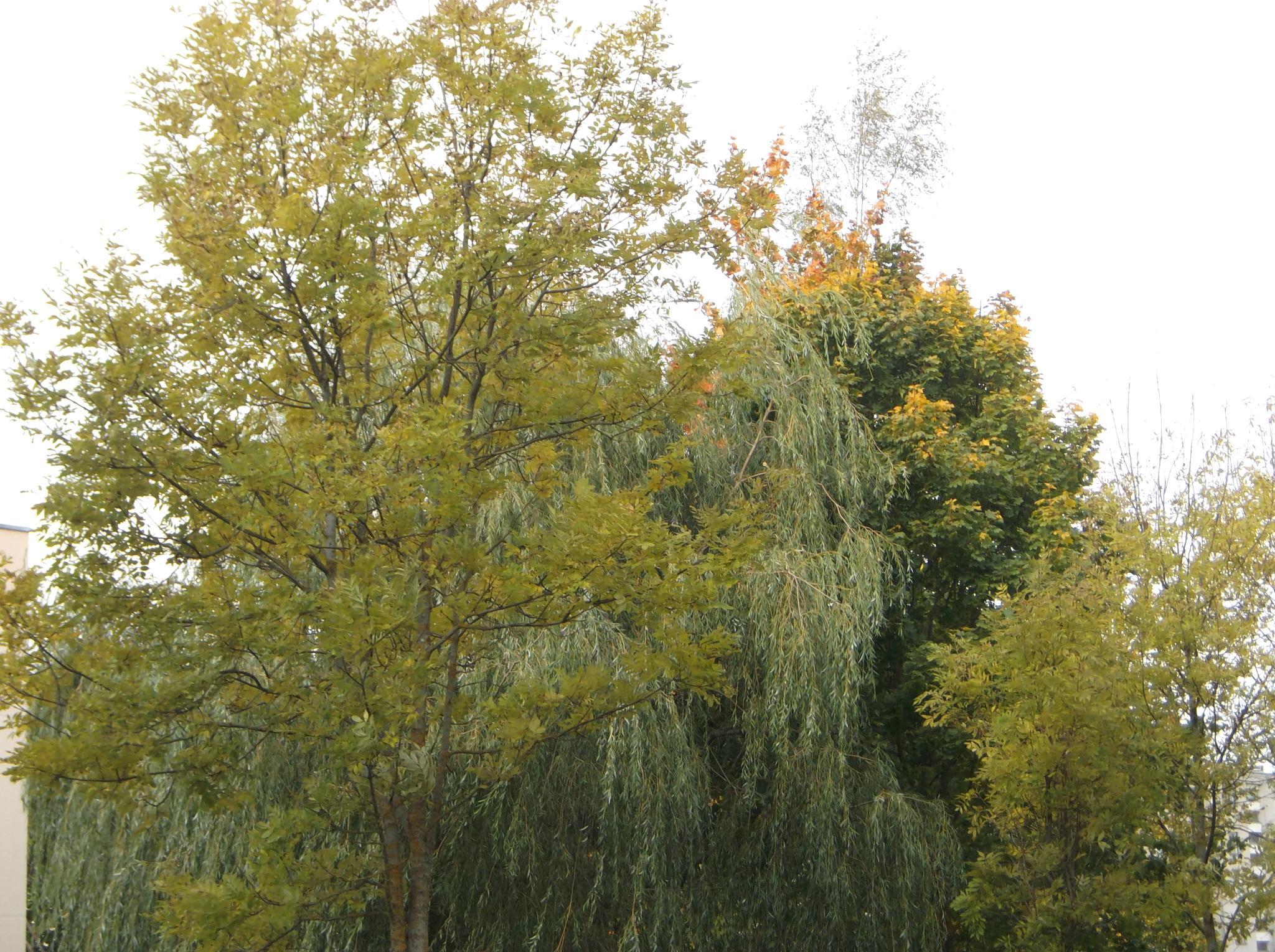 Autumn painted. by Zita Užkuraitienė