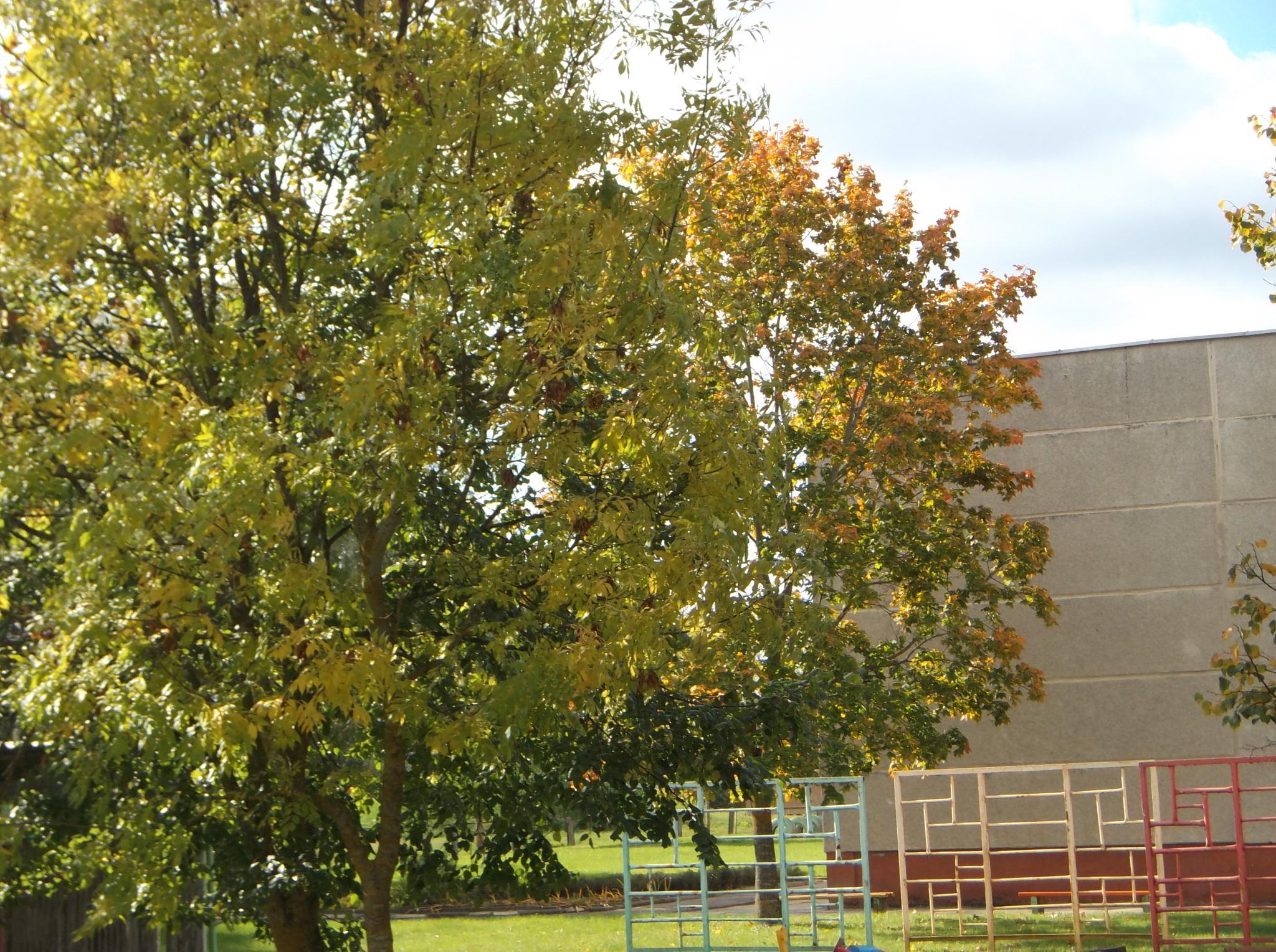 Trees in autumn. by Zita Užkuraitienė