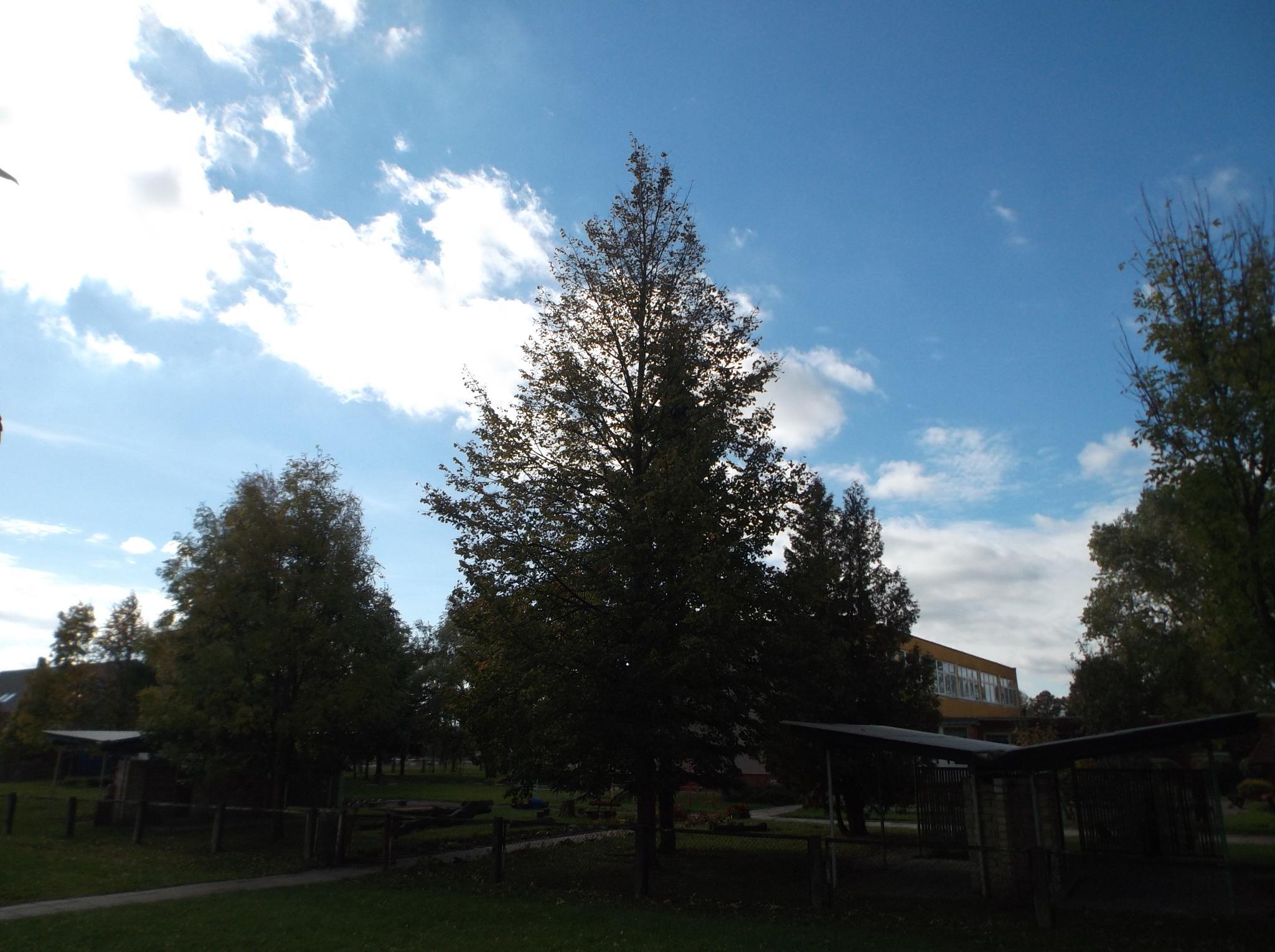 Sky and Trees by Zita Užkuraitienė