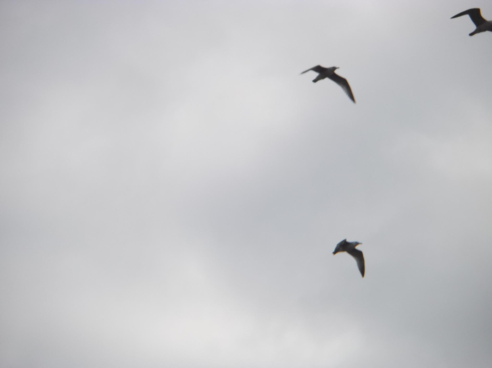 Birds in the skies. by Zita Užkuraitienė