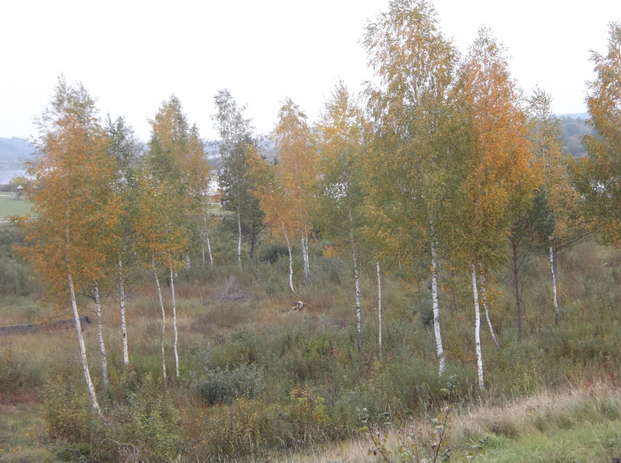 Autumn of the NEMUNAS. (River) by Zita Užkuraitienė