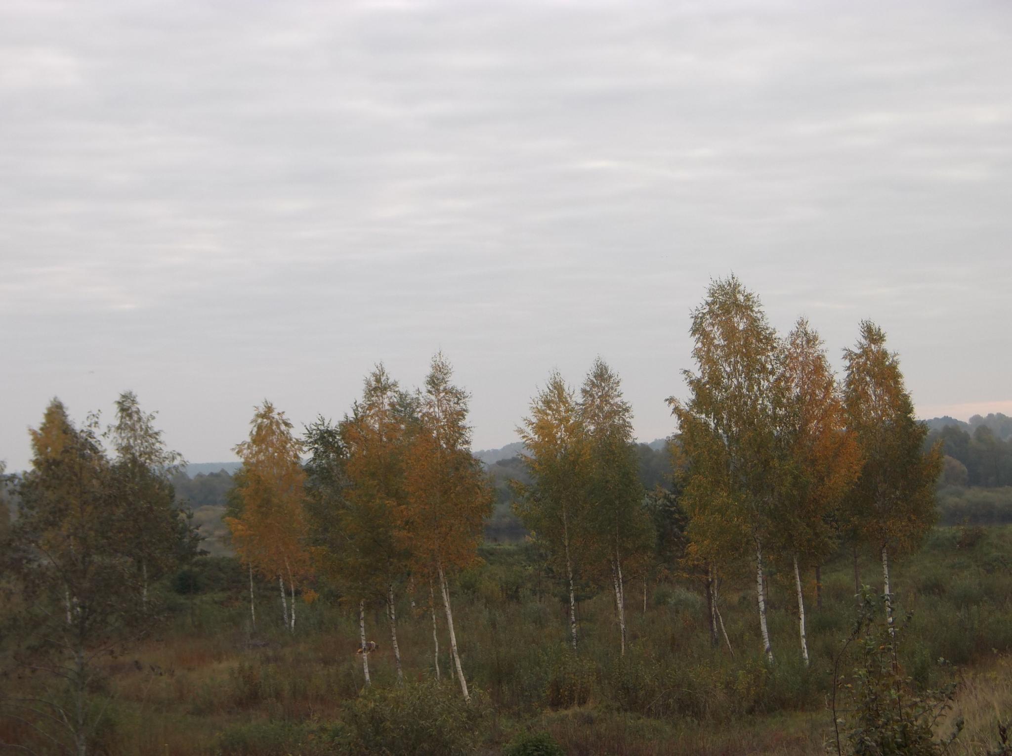 Autumn by Zita Užkuraitienė