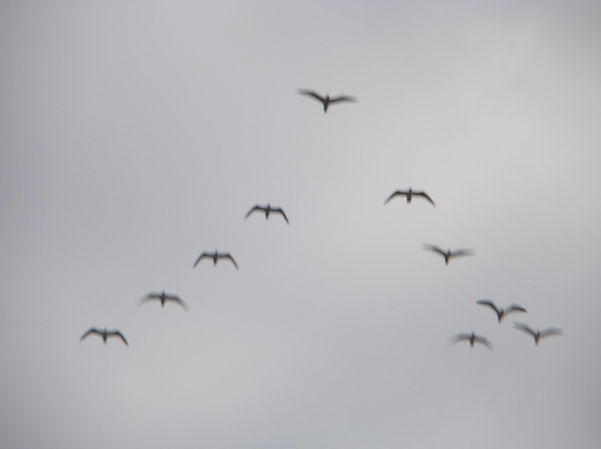 They fly. by Zita Užkuraitienė