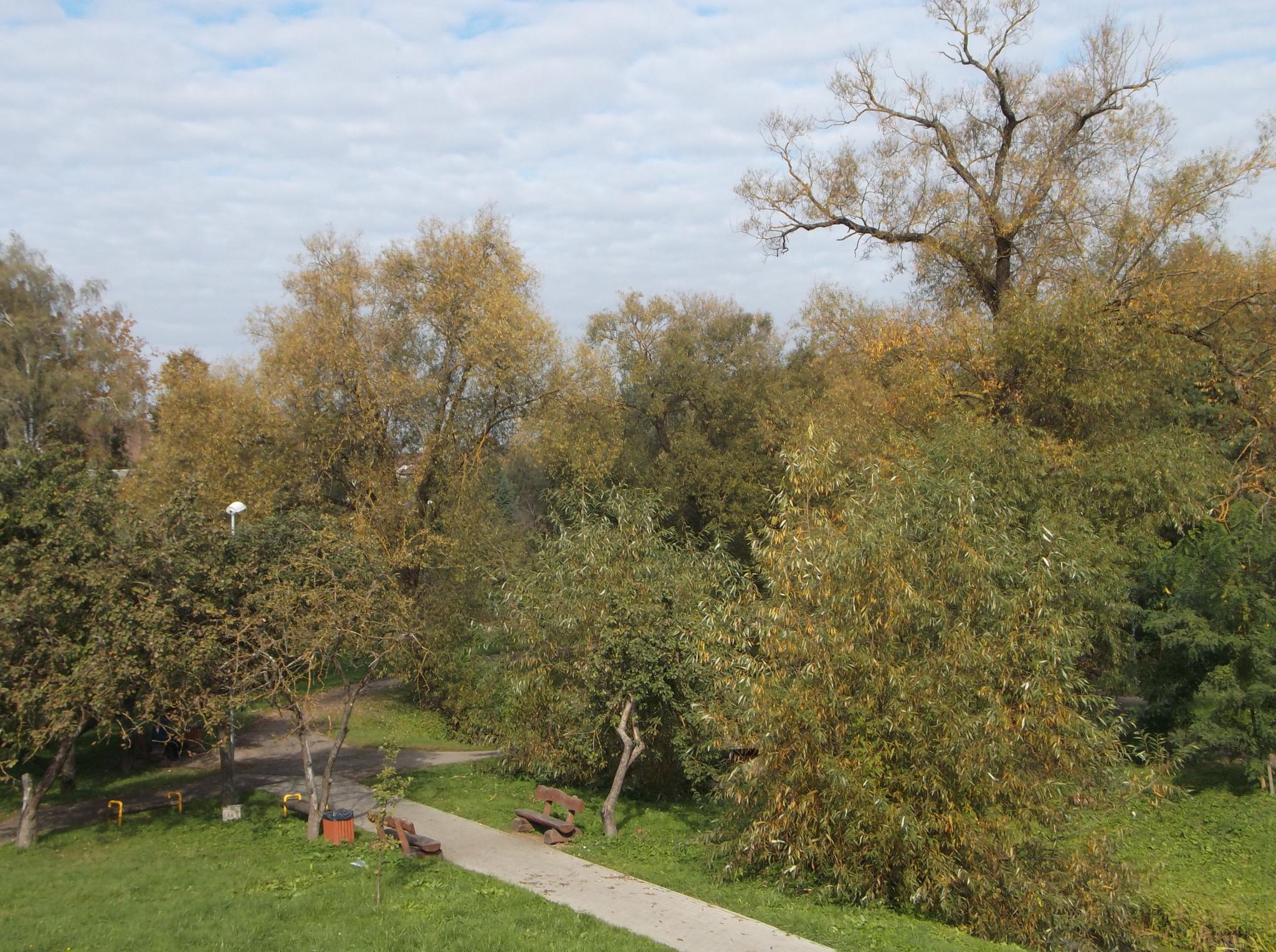 Autumn. by Zita Užkuraitienė