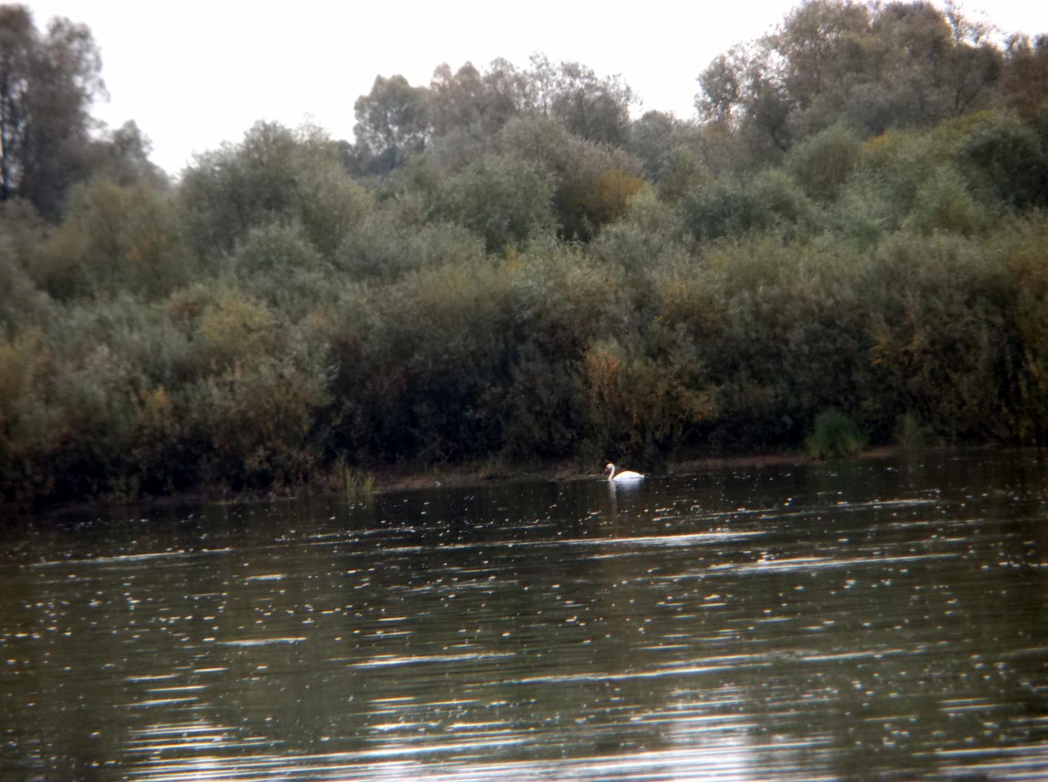 In the river. by Zita Užkuraitienė