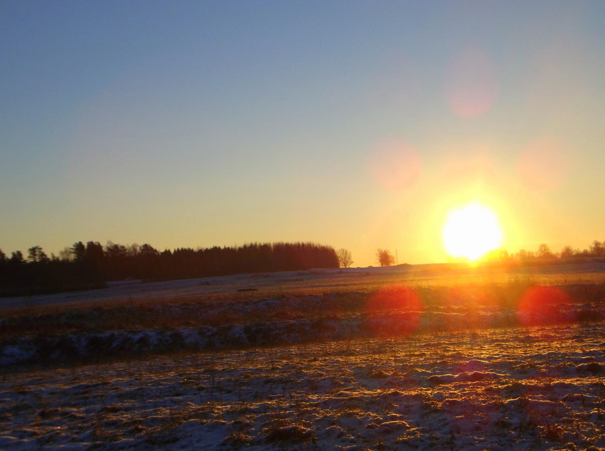 Morning by Zita Užkuraitienė
