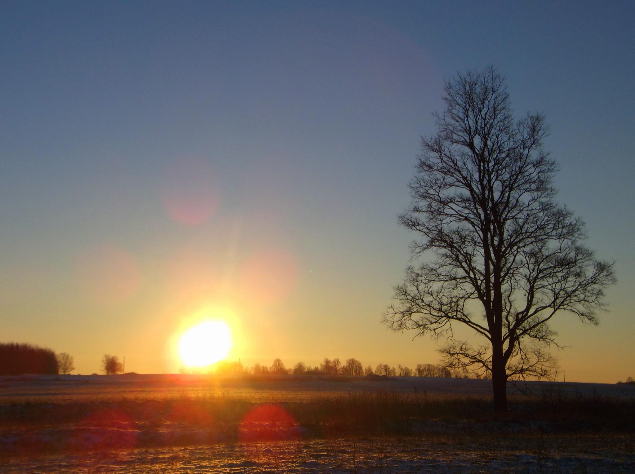 Winter morning. by Zita Užkuraitienė