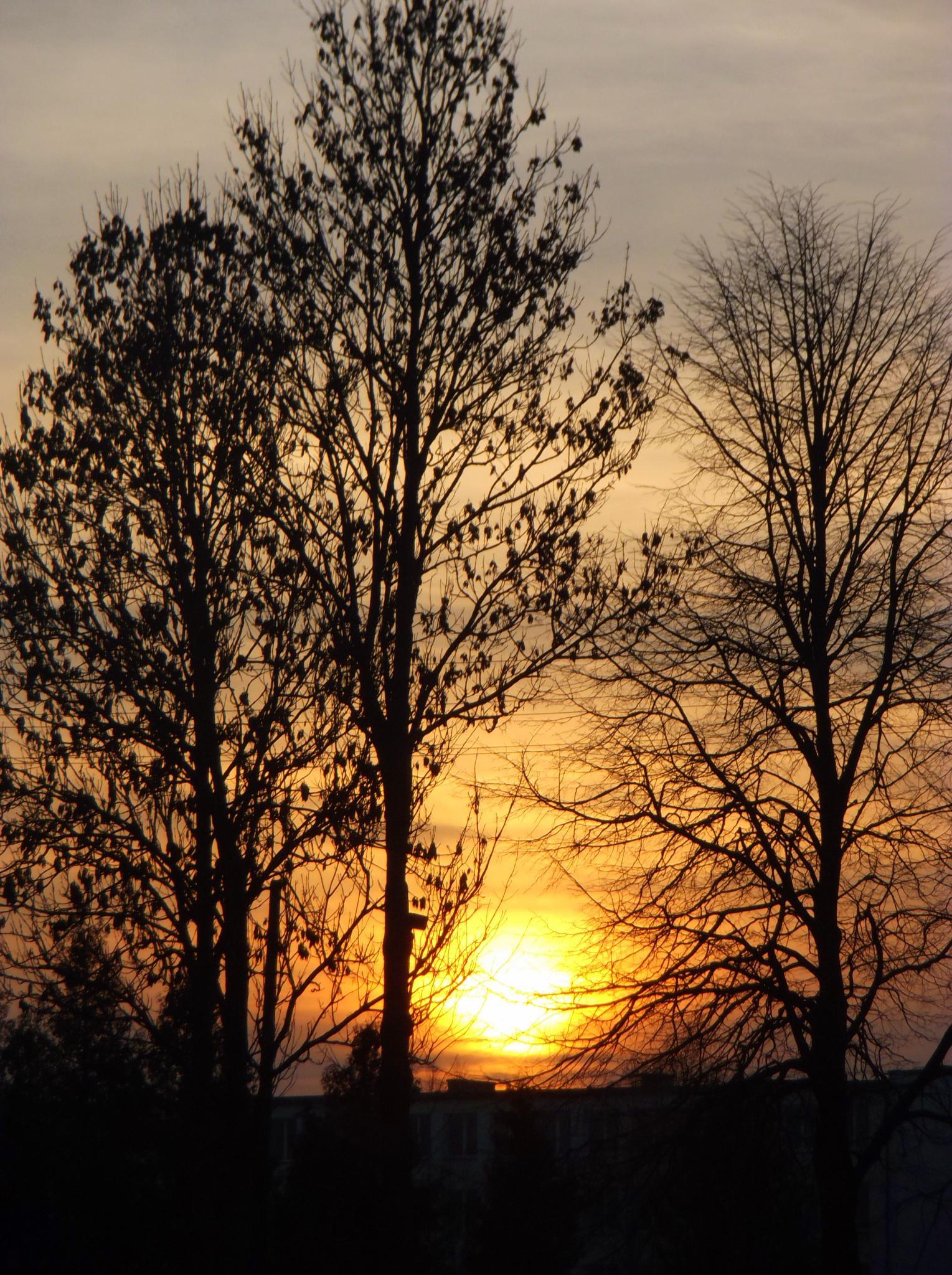 Sunrise. by Zita Užkuraitienė