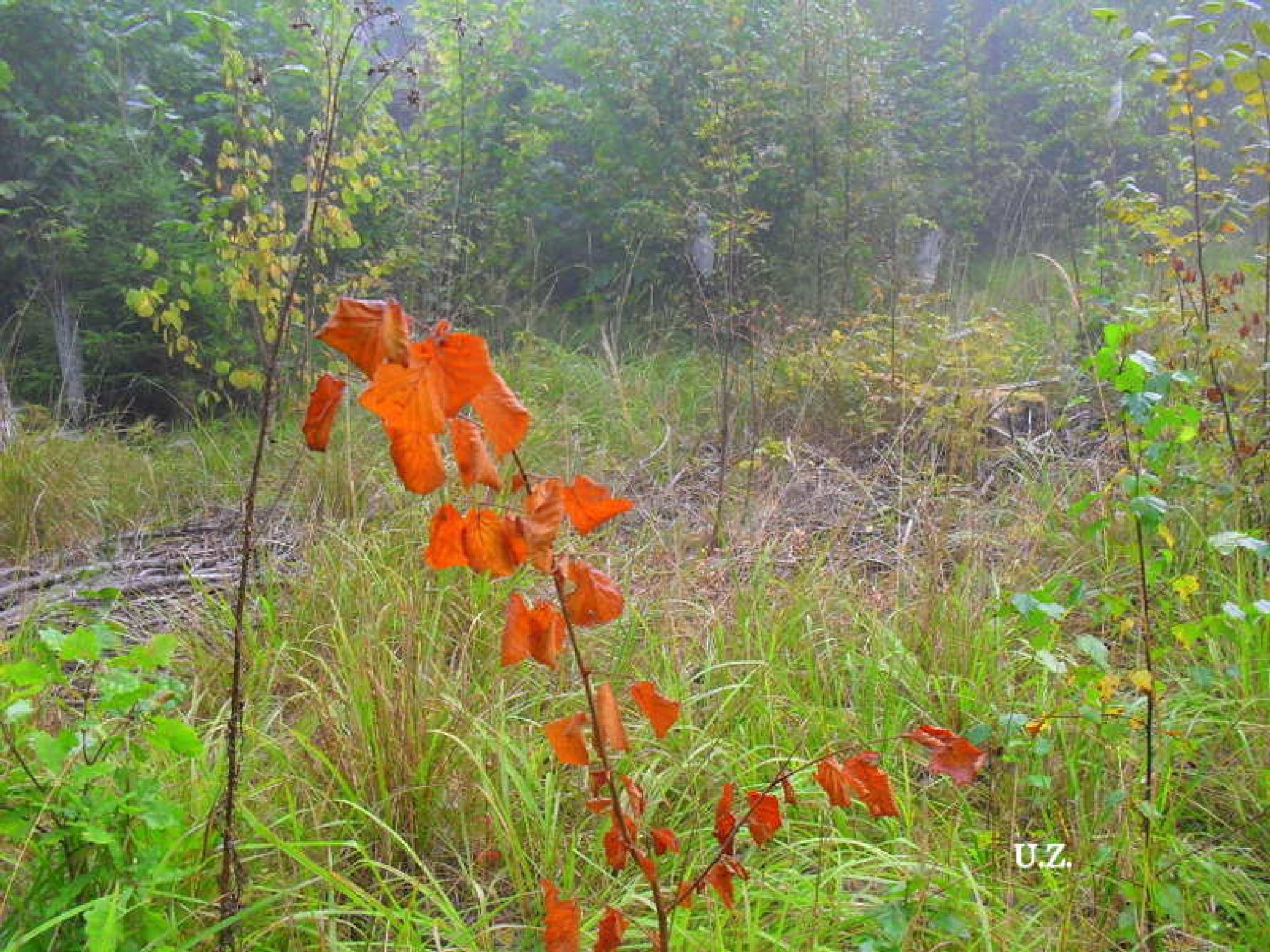 Autumn in the forest by Zita Užkuraitienė
