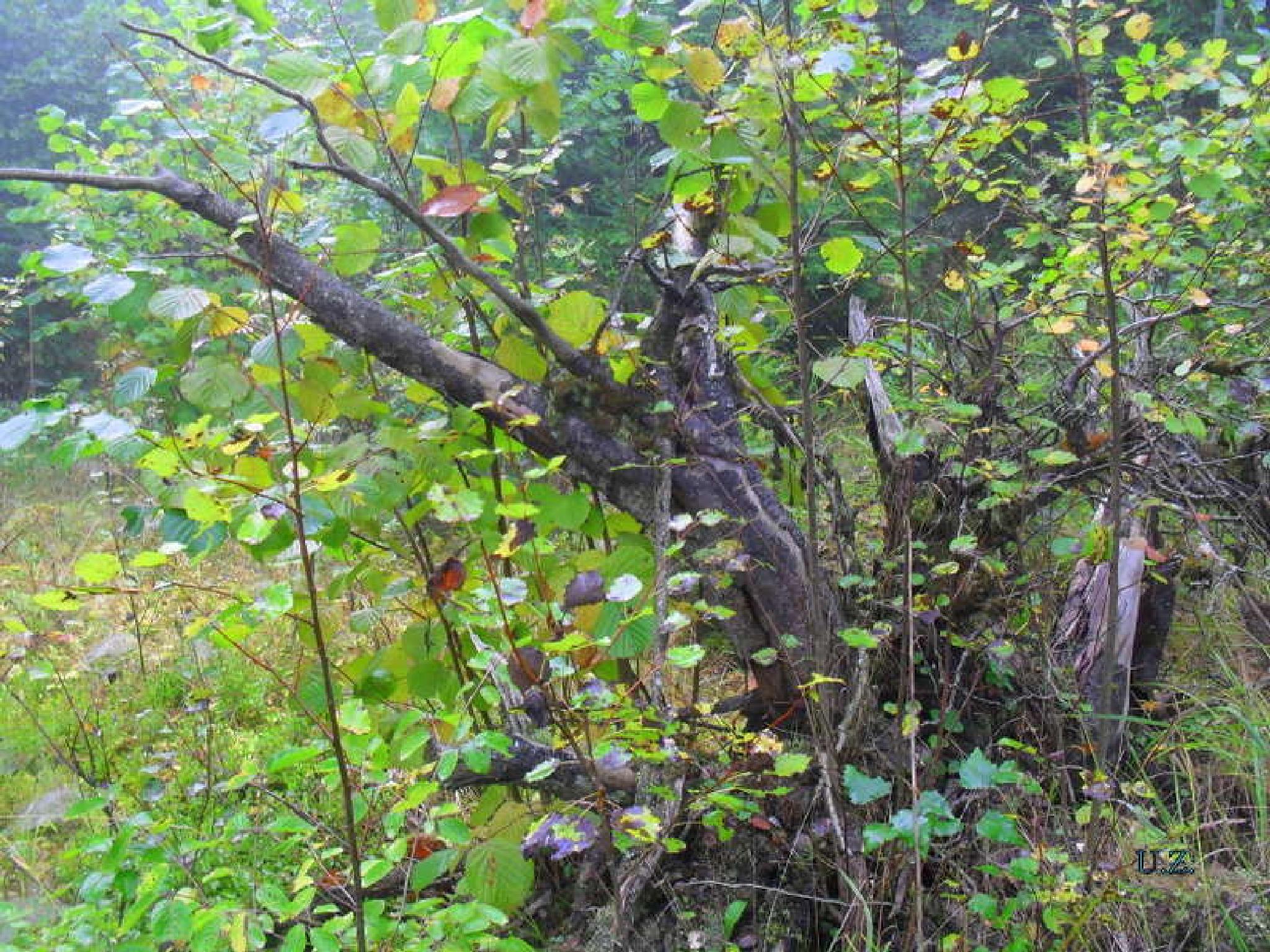 In forest. by Zita Užkuraitienė