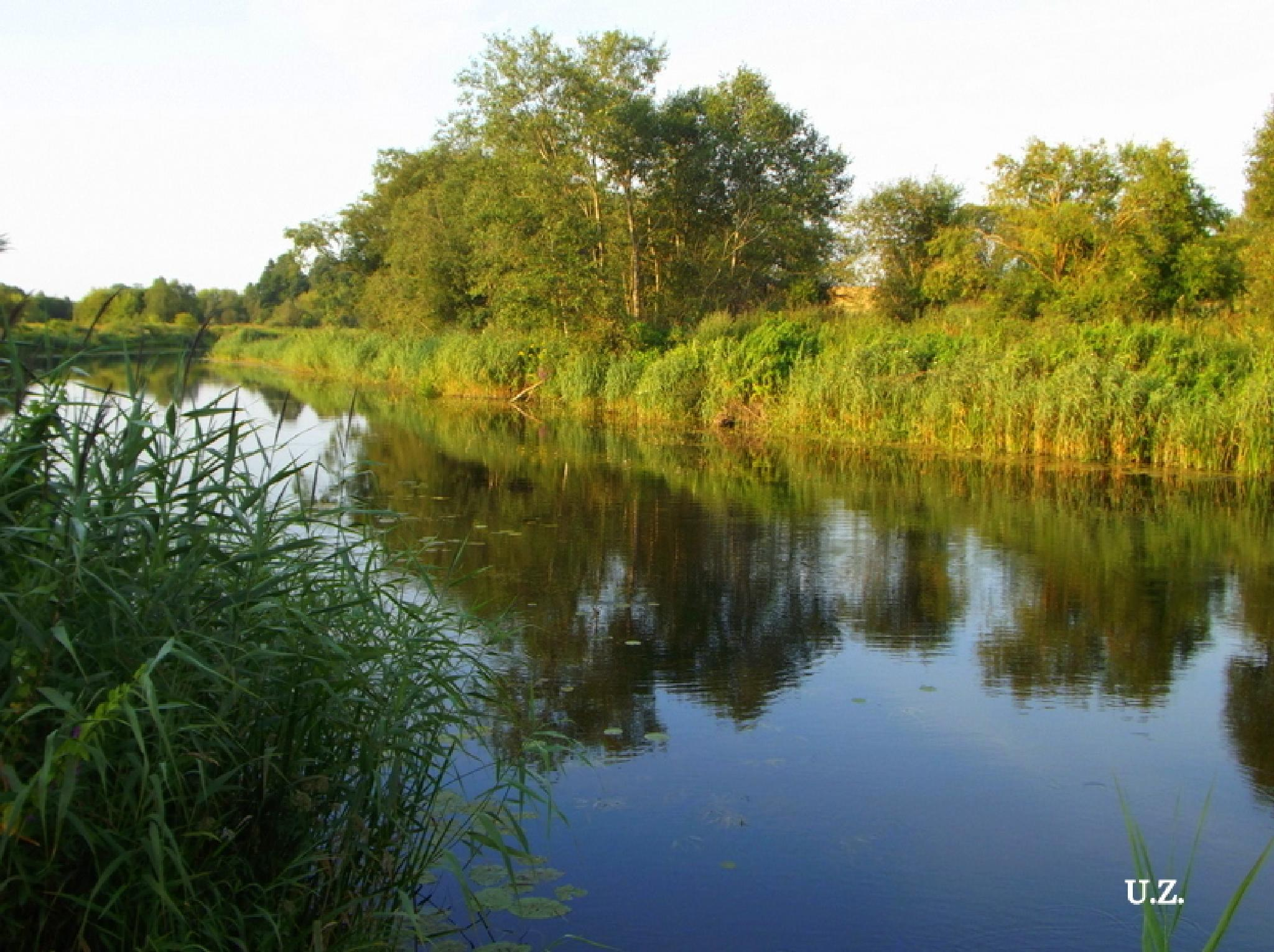 Summer morning on the river by Zita Užkuraitienė