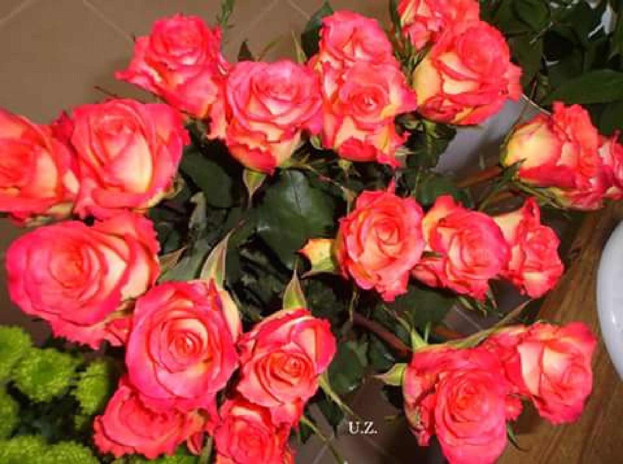 Red roses by Zita Užkuraitienė