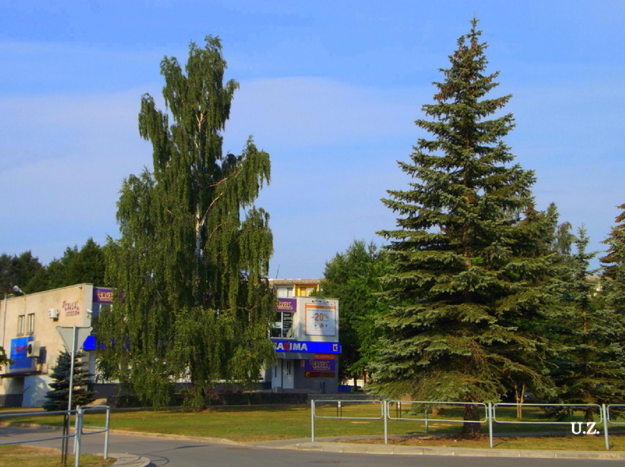 Trees in the city by Zita Užkuraitienė
