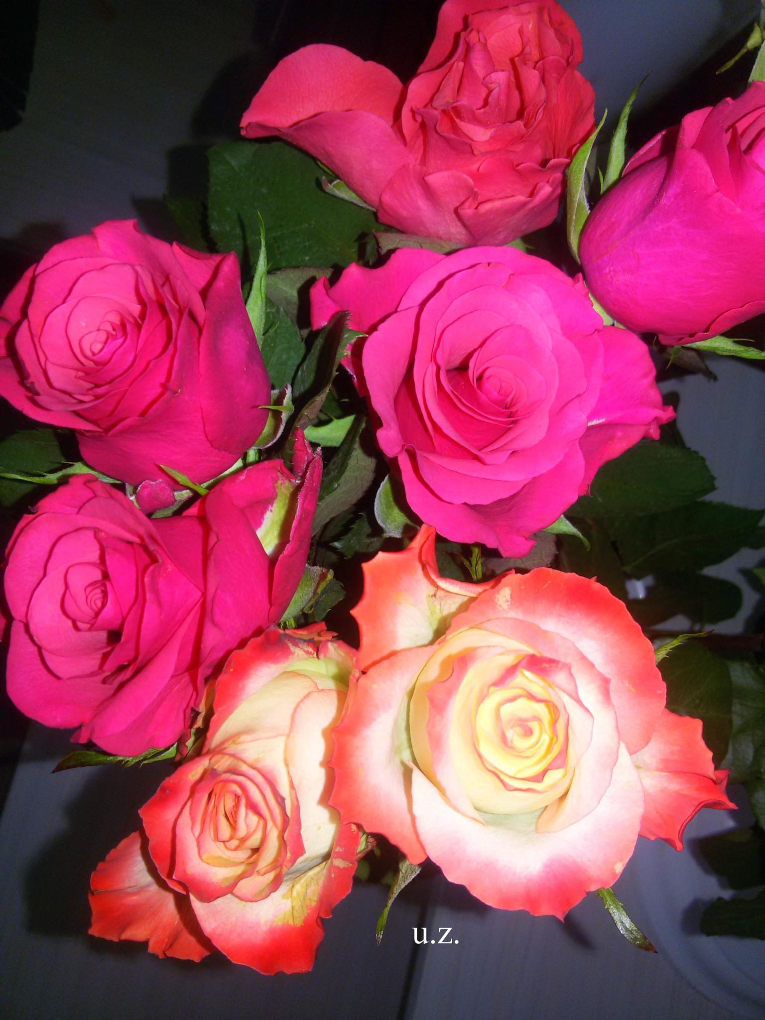 Roses friend by Zita Užkuraitienė