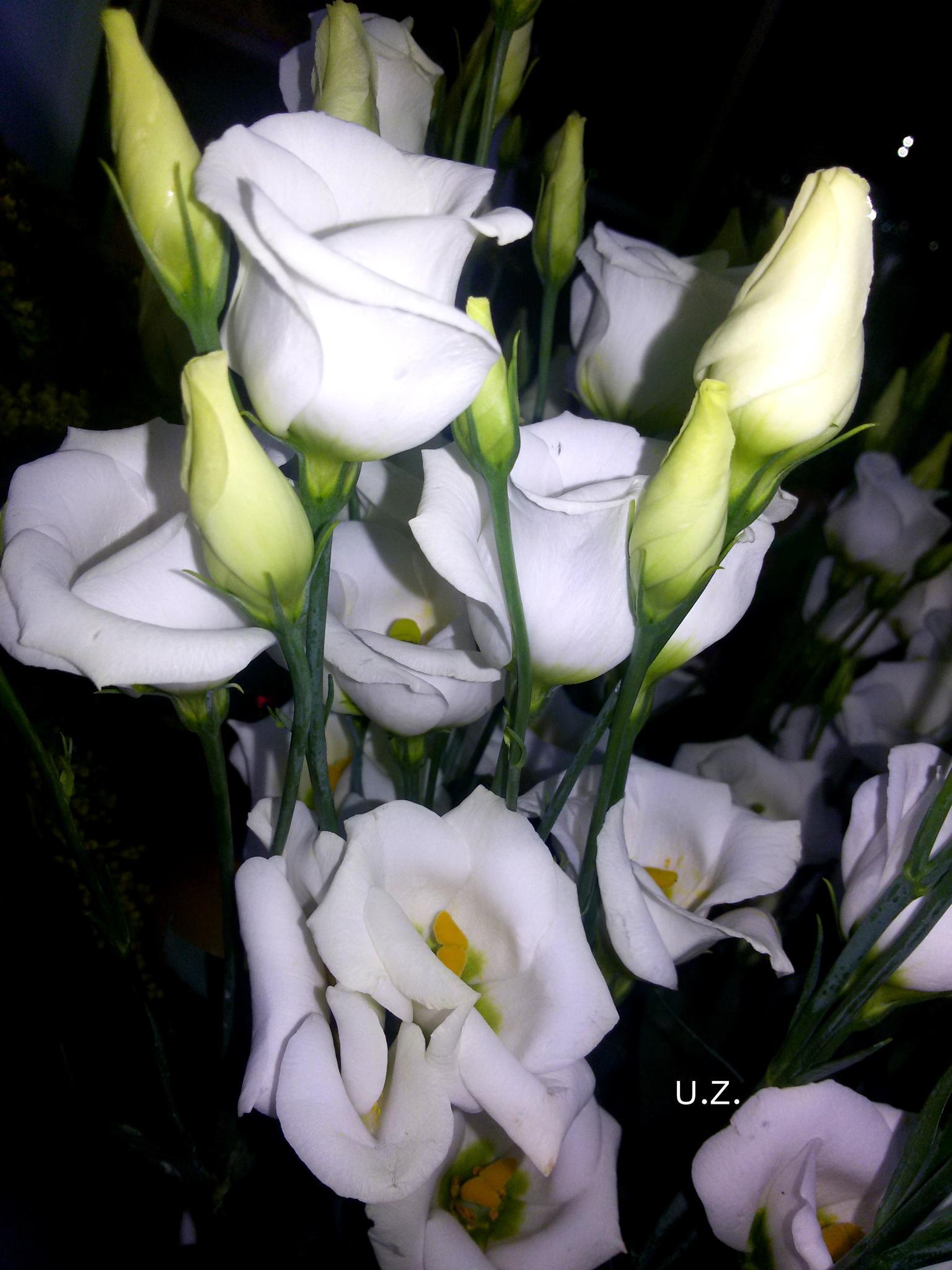 Flower 342 by Zita Užkuraitienė