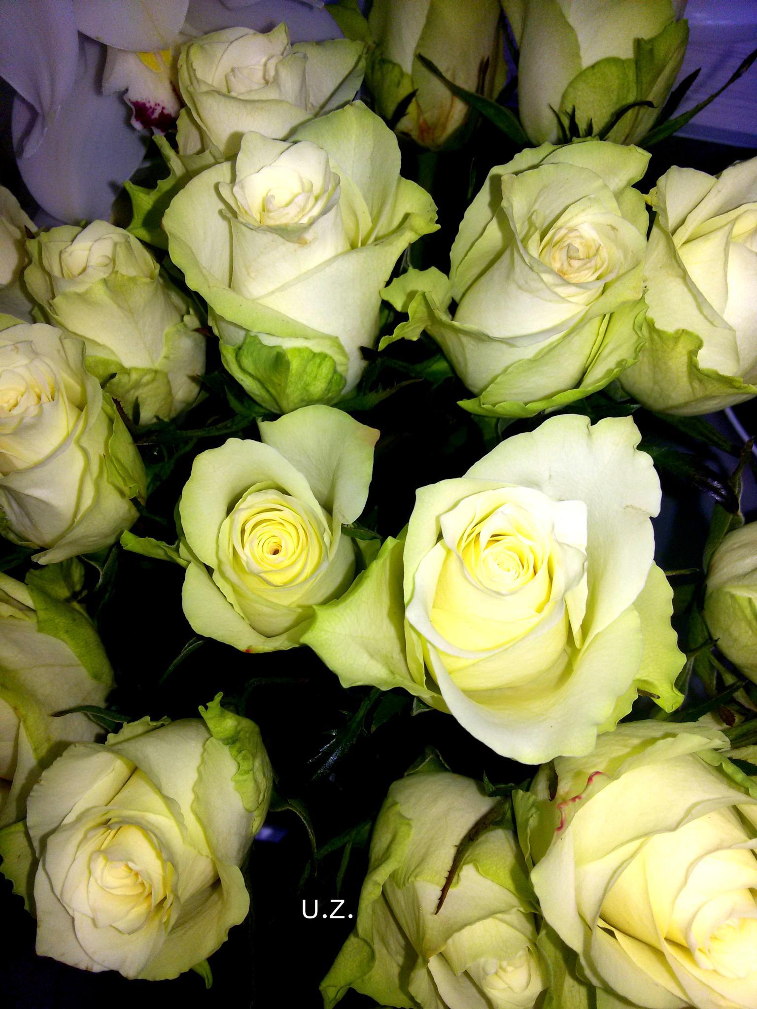 Flowers 341 by Zita Užkuraitienė
