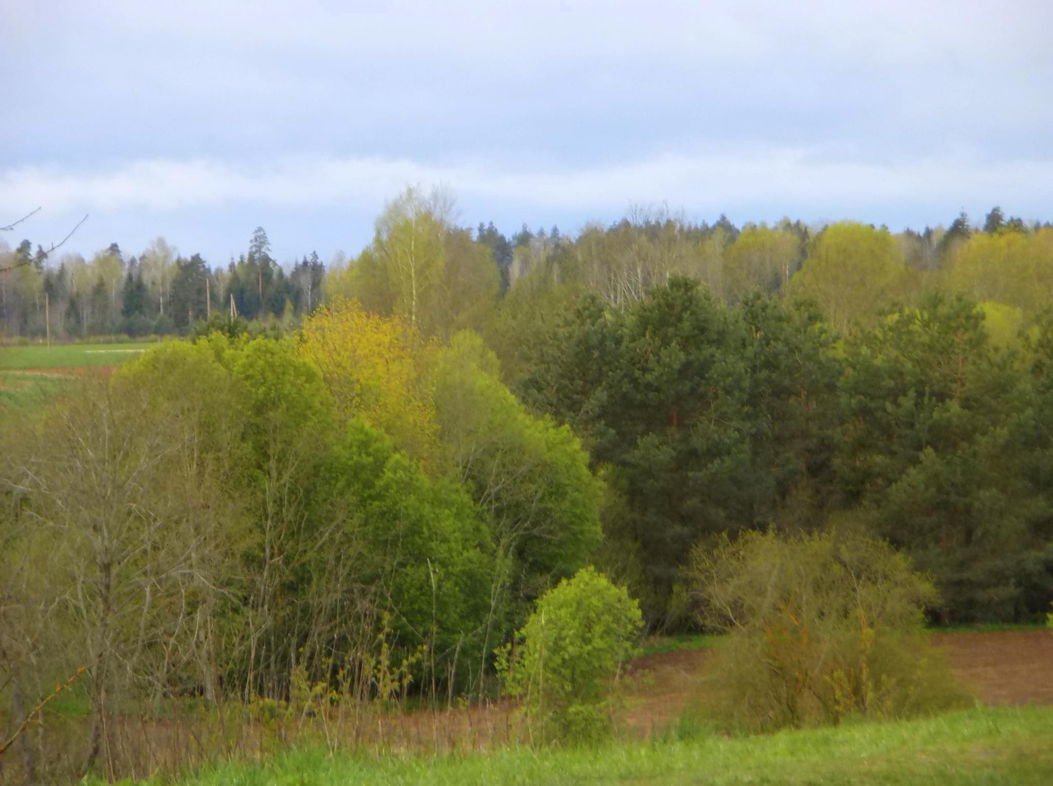 Riverside trees by Zita Užkuraitienė
