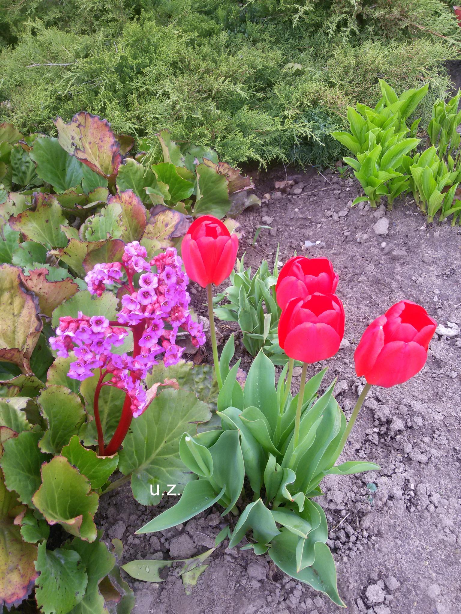 Flower garden by Zita Užkuraitienė