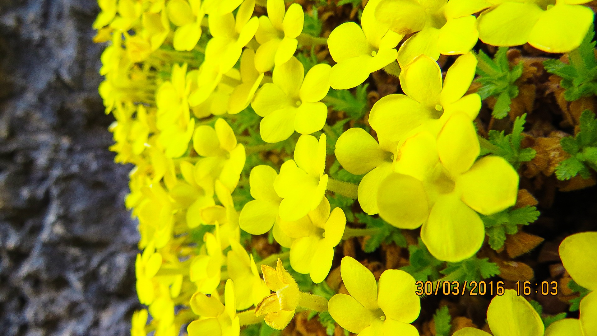 flower by ahmad
