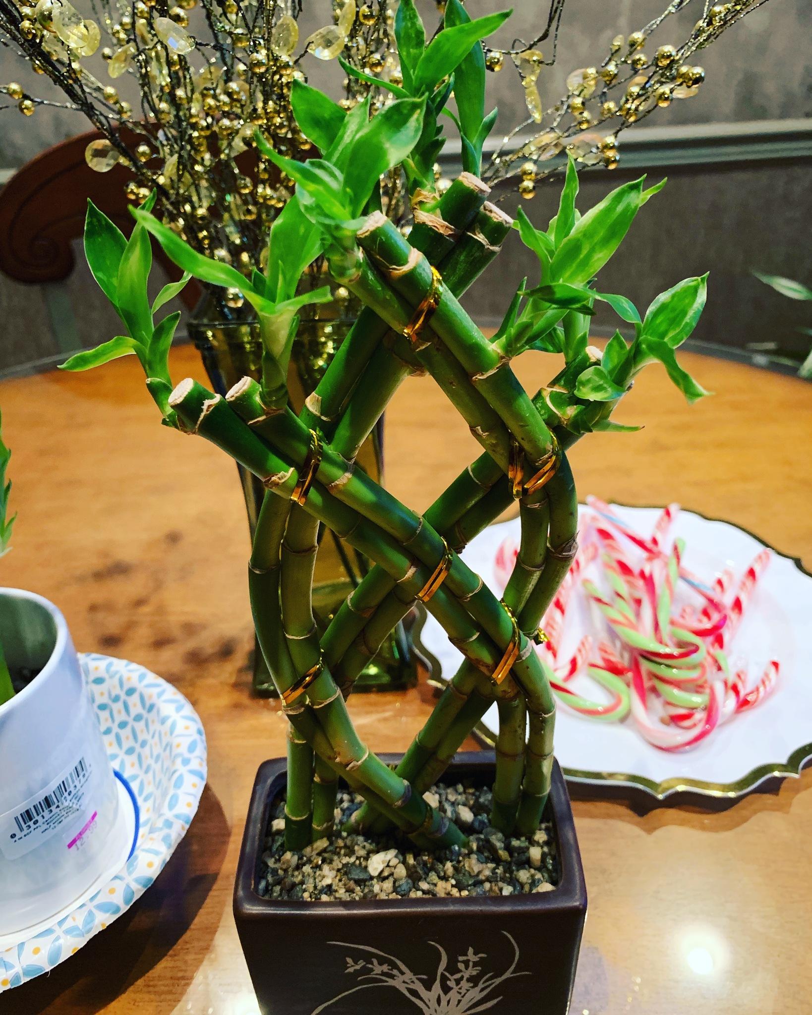 Bamboo tree! by NicoleLarizza