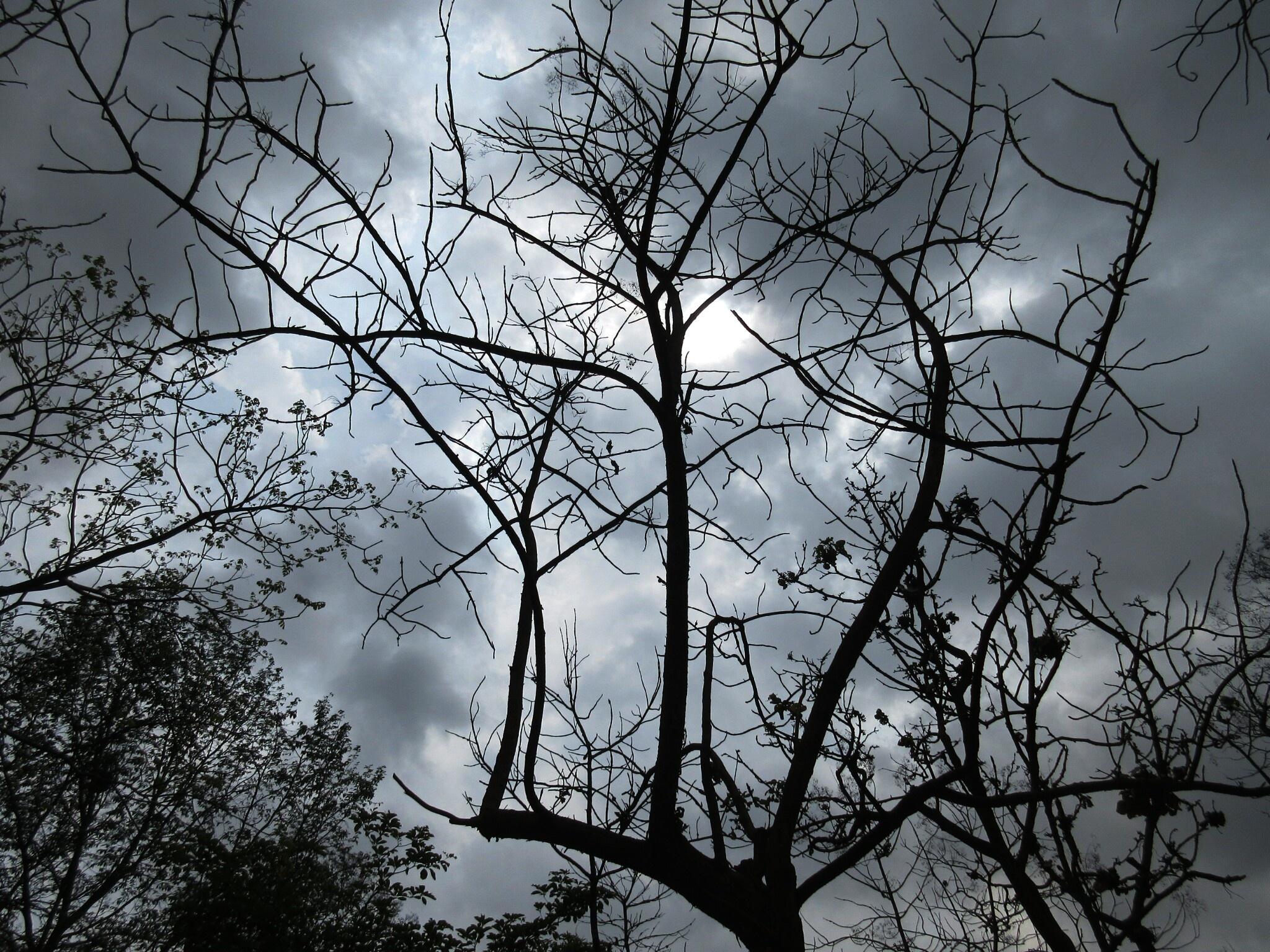 Dark Rises by TRAVEL WITH YOGI