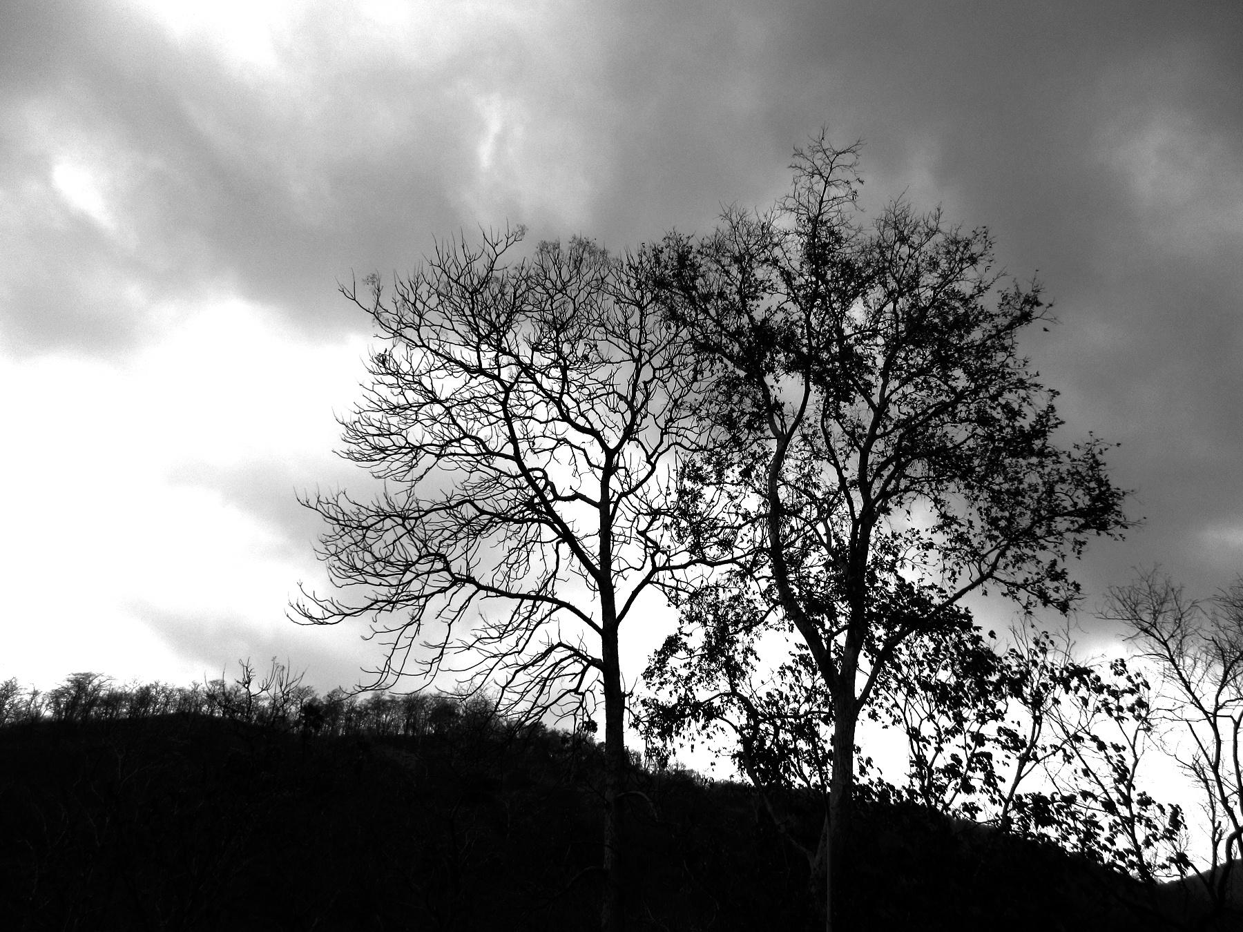 tree life by TRAVEL WITH YOGI