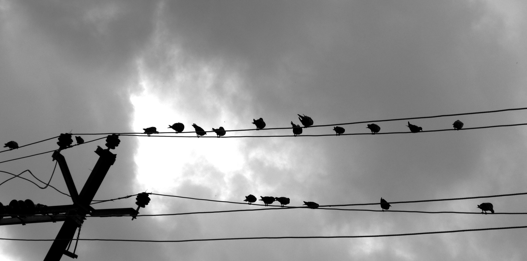 Photo in Black and White #birds life #travel life #india