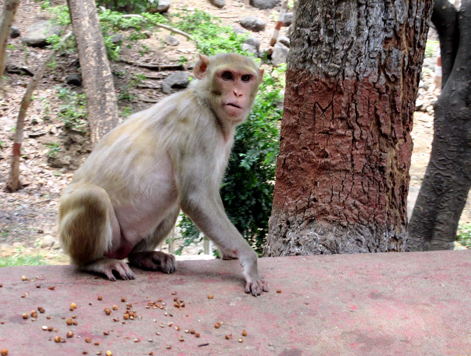 wicked monkey - animal life by TRAVEL WITH YOGI