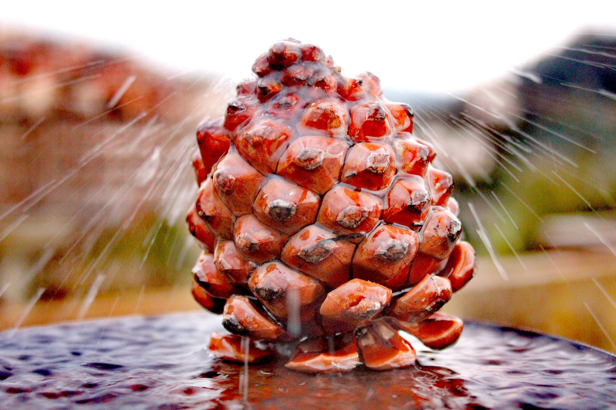 Photo in Random #water #pine