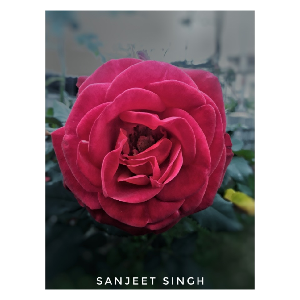 Untitled by Sanjeet Singh Dhillon