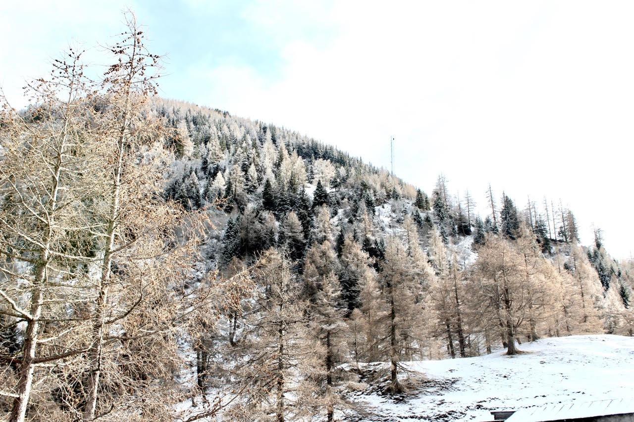 white fir by Coco Gm