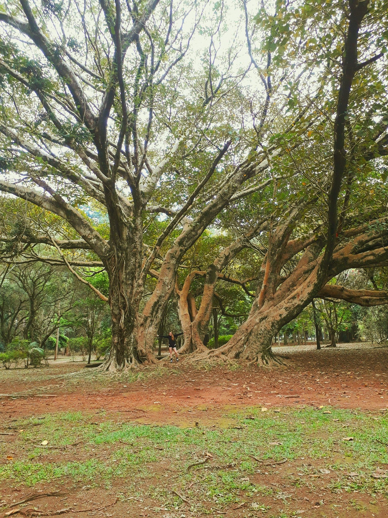 Trees are more than mere ornaments by Thayna